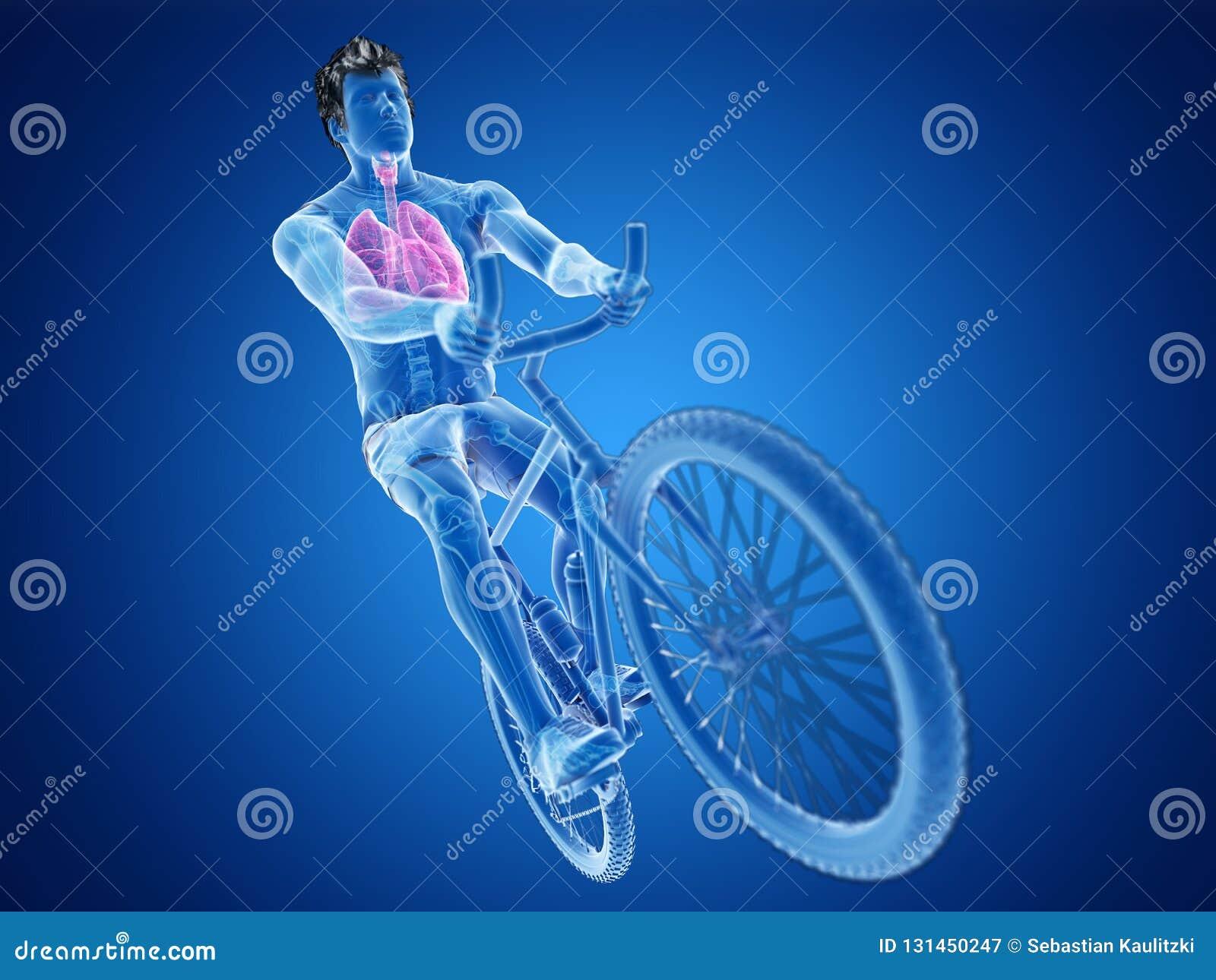 Um pulmão dos ciclistas