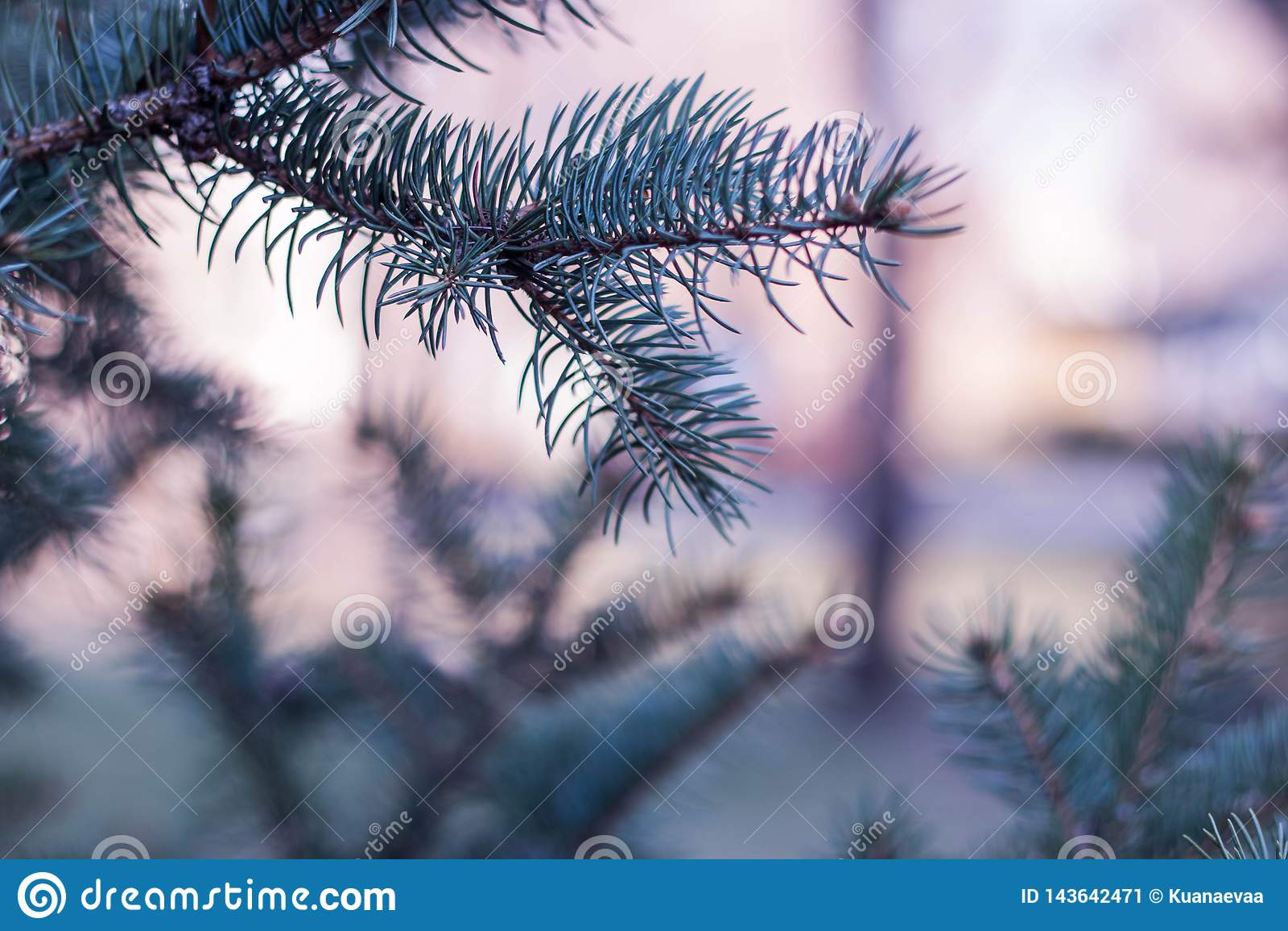 Um ramo só
