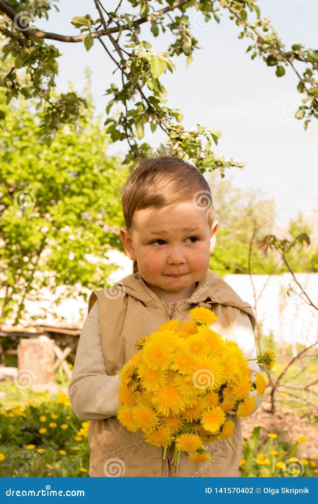 Um rapaz pequeno está guardando um grande ramalhete dos dentes-de-leão amarelos, tímido, fazendo caretas, um presente a sua mãe