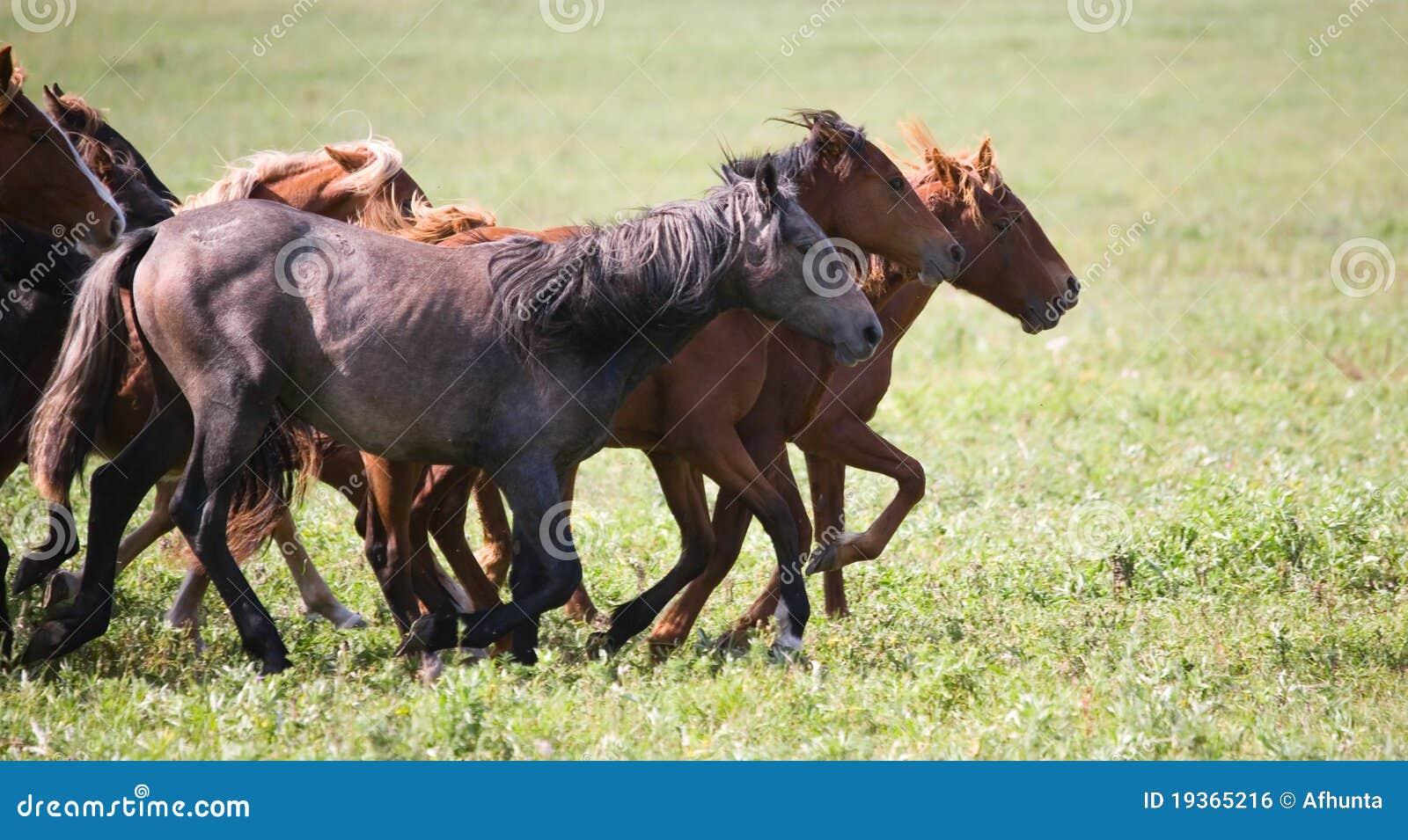 Um rebanho de cavalos novos