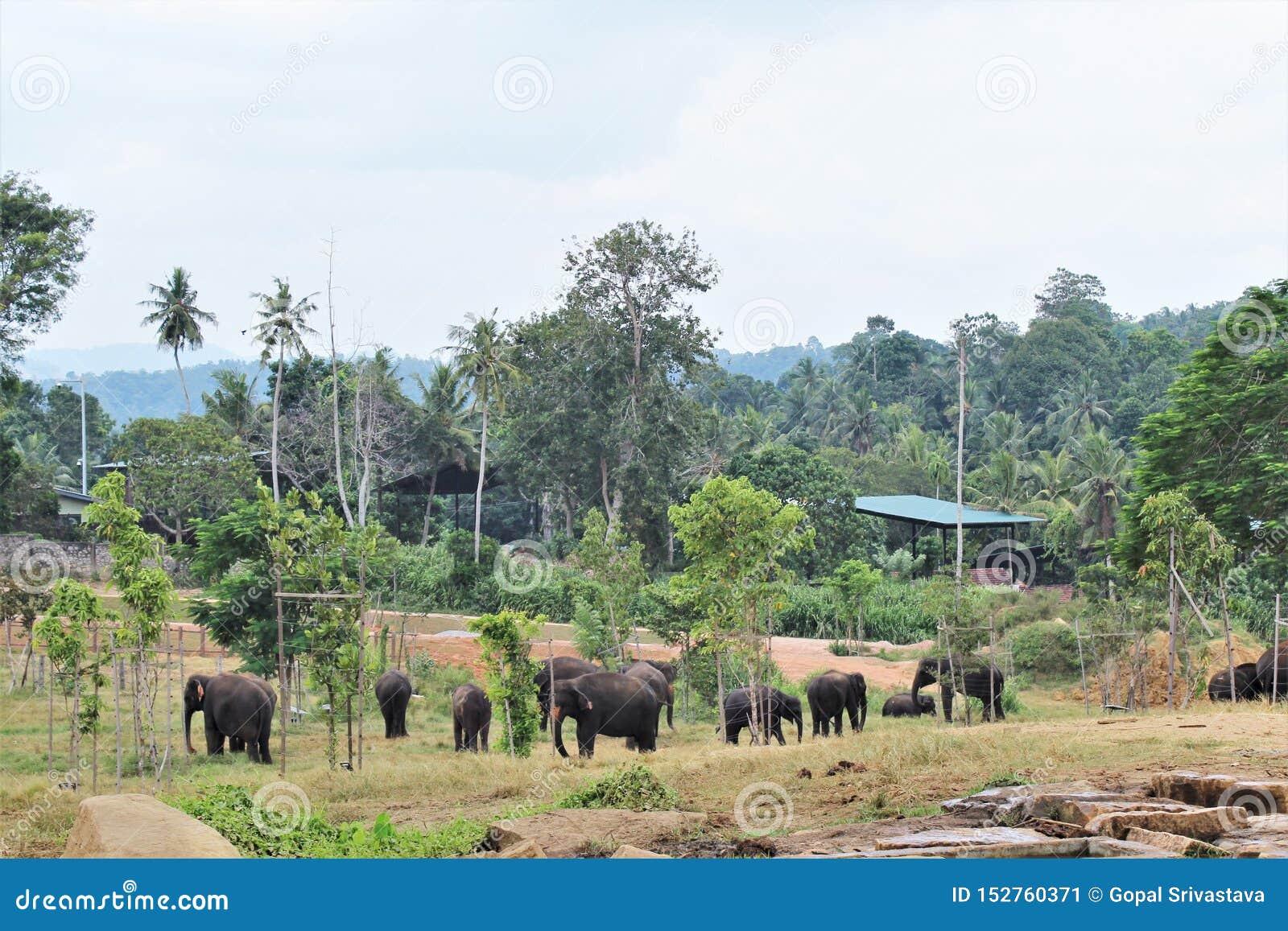 Um rebanho dos elefantes vagueia livremente em arredores naturais
