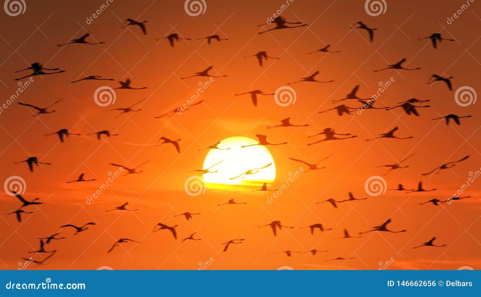 Um rebanho enorme dos flamingos no luminoso no fundo de um por do sol africano alaranjado bonito animais selvagens de ?frica