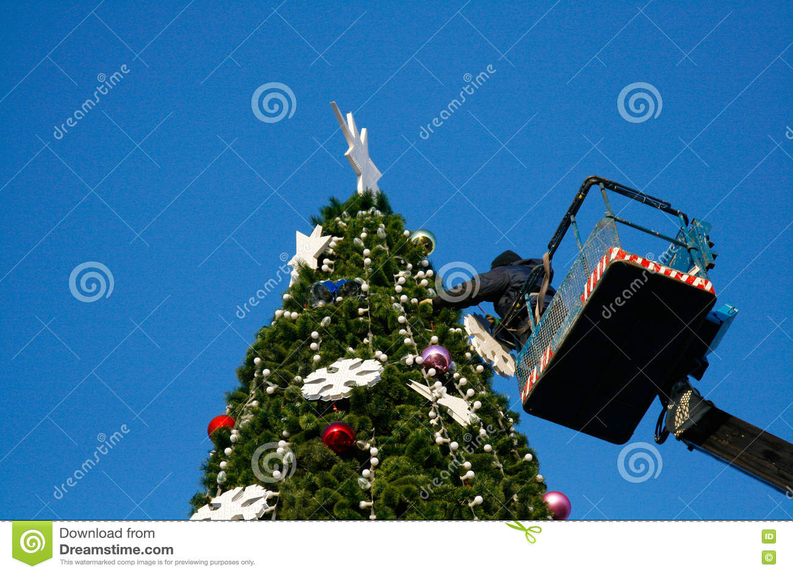 Um trabalhador decora uma árvore de Natal