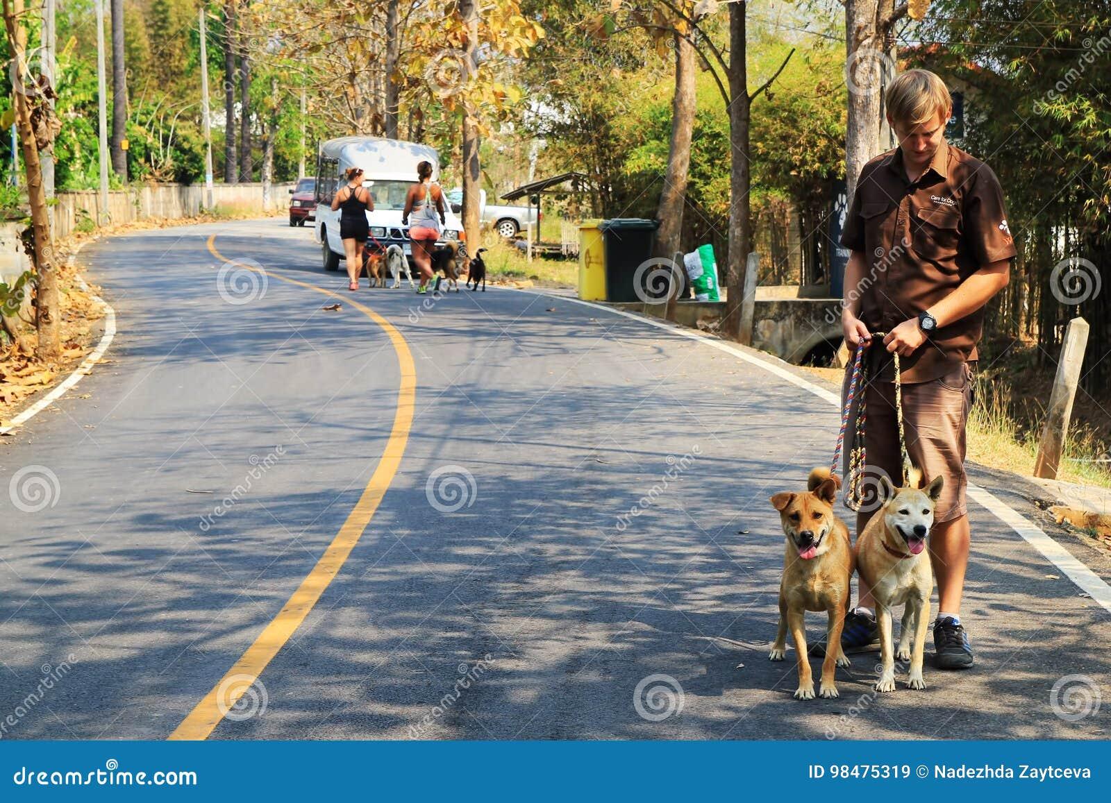 Um trabalhador do abrigo para cães está andando com os dois cães do abrigo Chiang Mai, Tailândia
