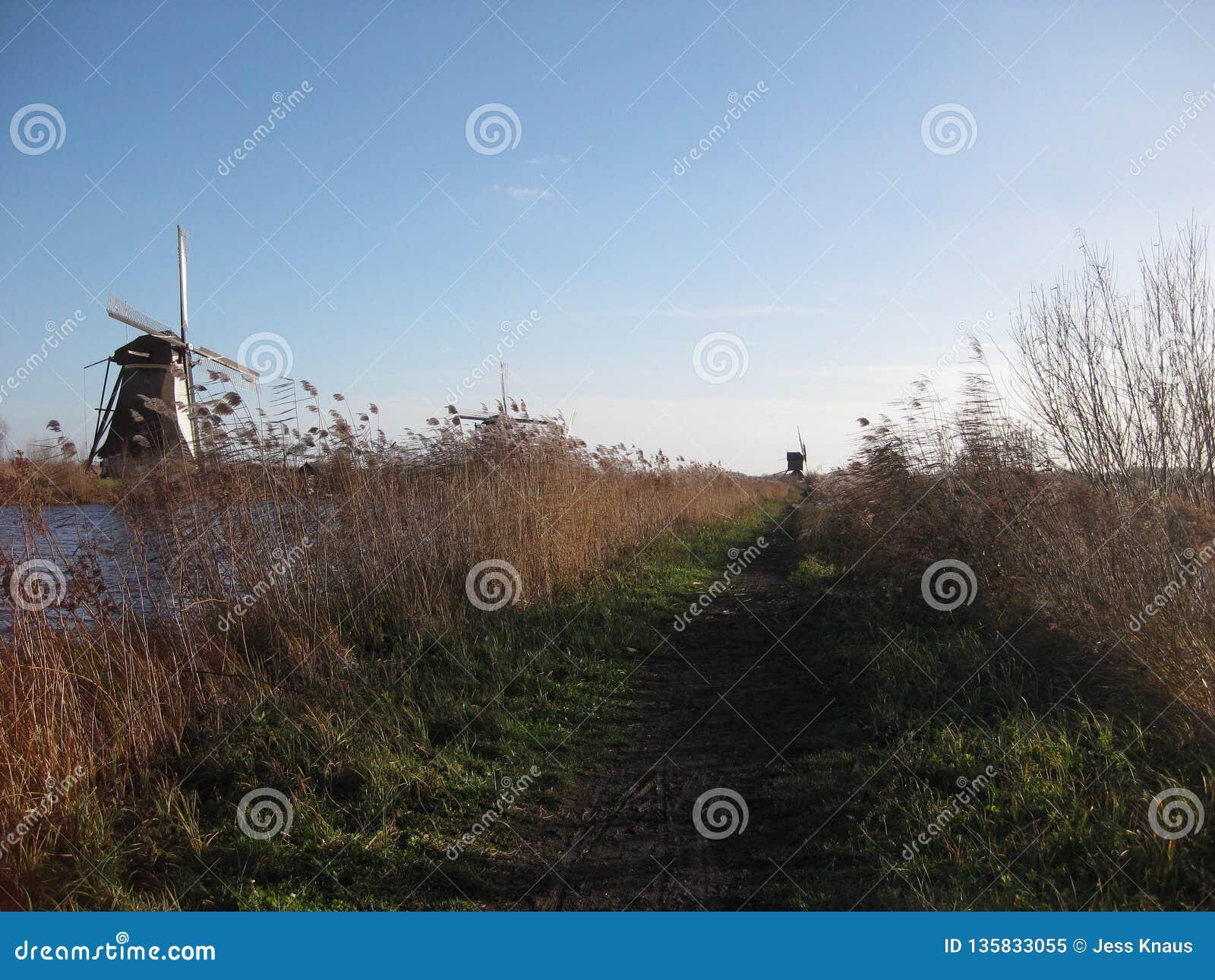 Um trajeto de passeio gramíneo que corre ao longo do Kinderdijk perto de Rotterdam, os Países Baixos