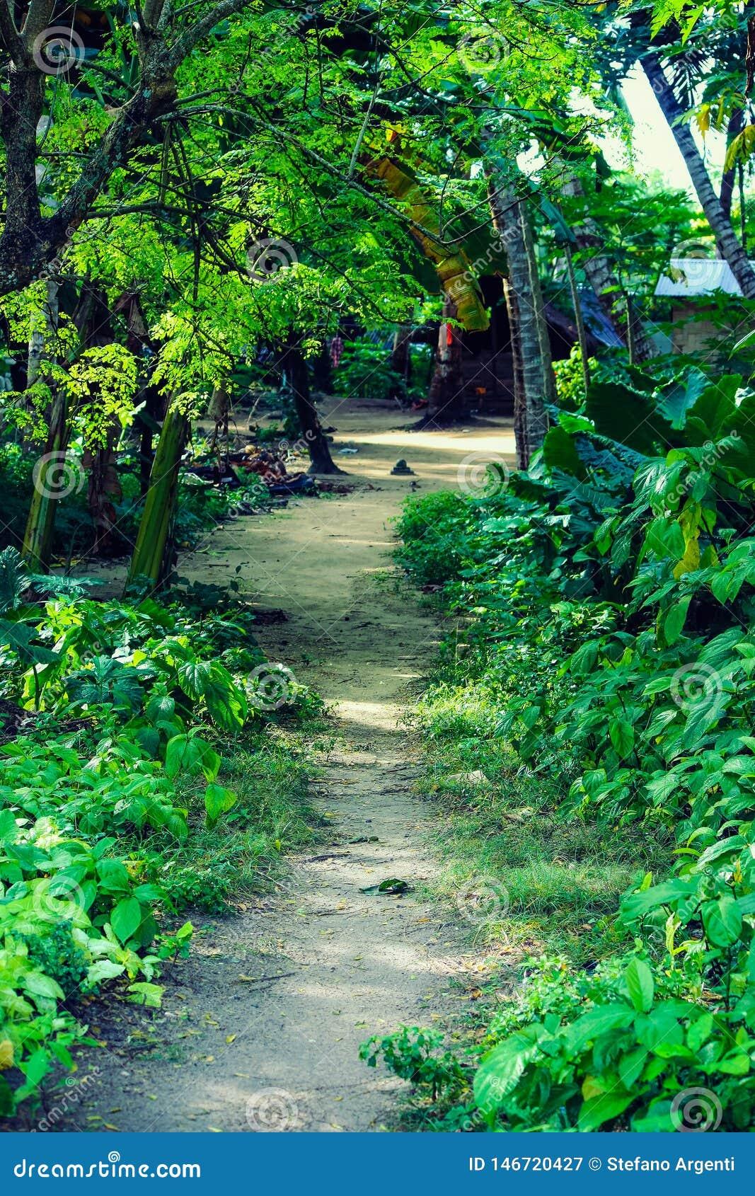 Um trajeto na selva na ilha de Havelock