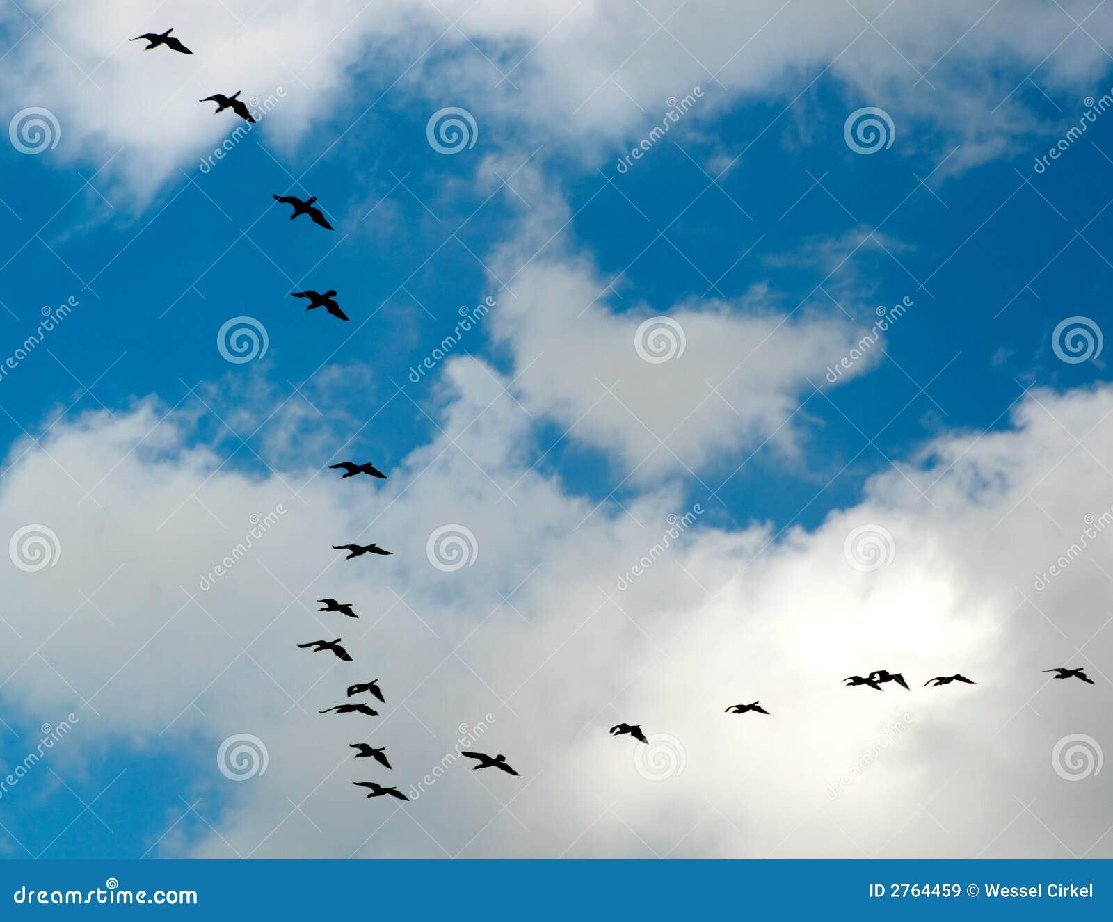 Um vôo dos gansos