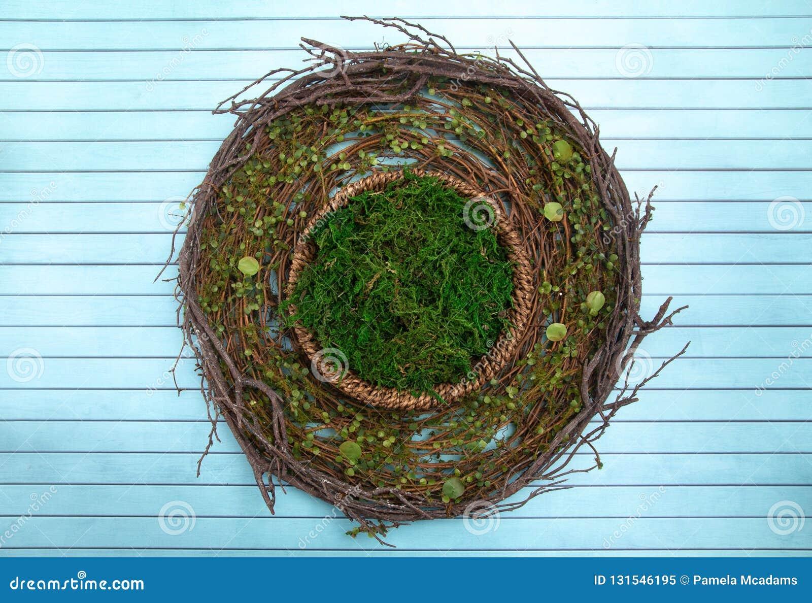 Um verde Moss Digital Newborn Backdrop do círculo para fotógrafo recém-nascidos