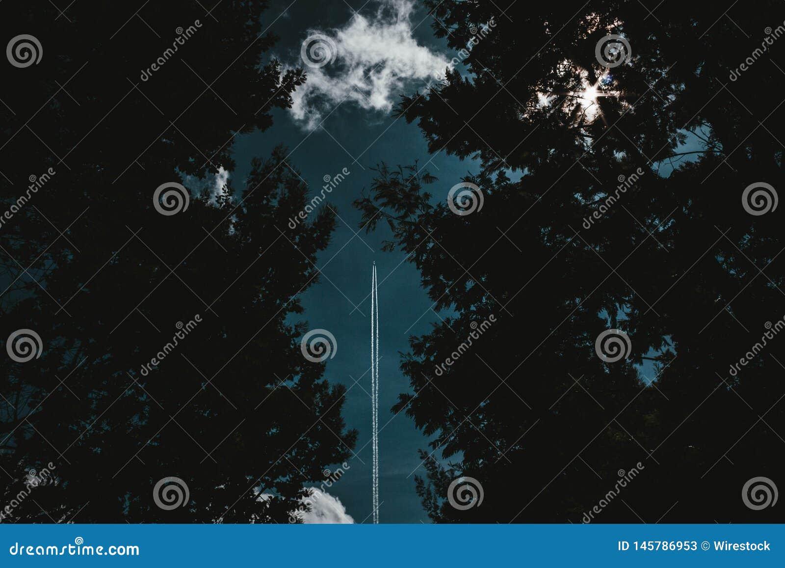Um voo do foguete no tiro do céu através de uma floresta