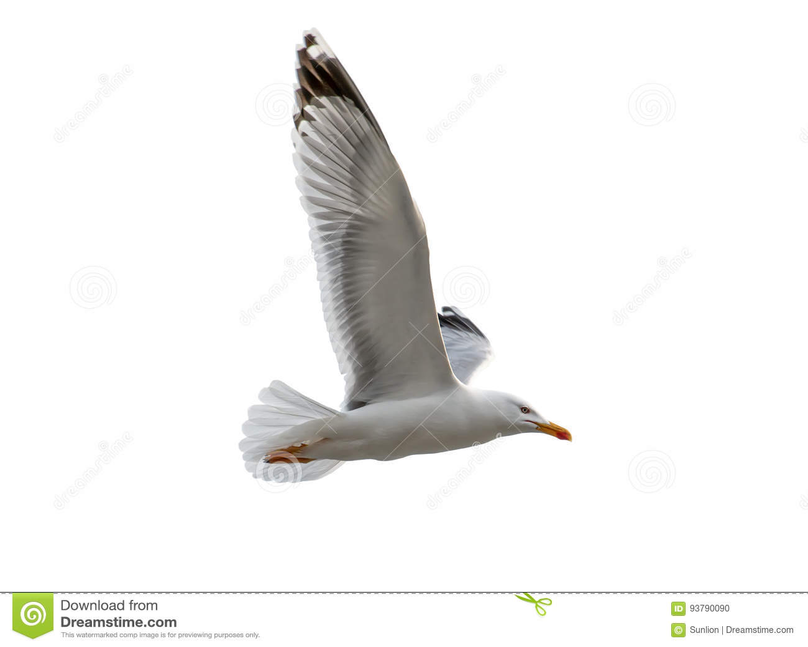 Um voo do pássaro da gaivota isolado no fundo branco