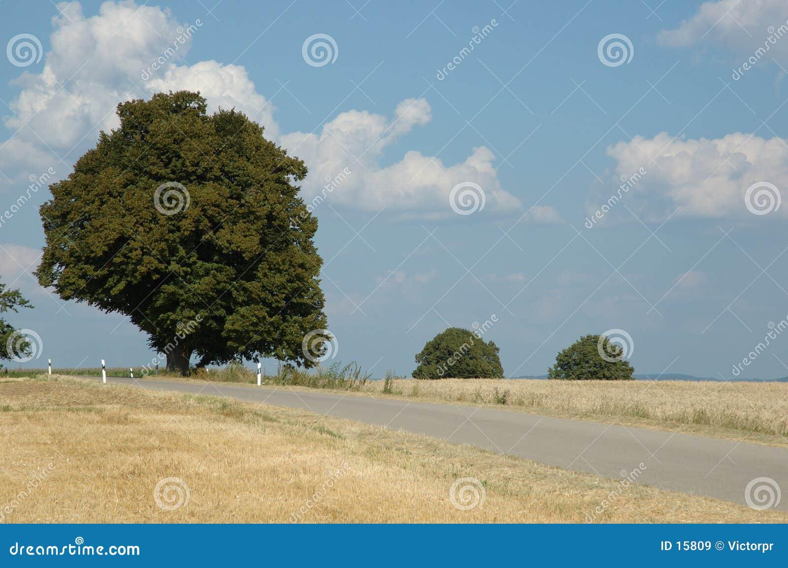 Uma árvore