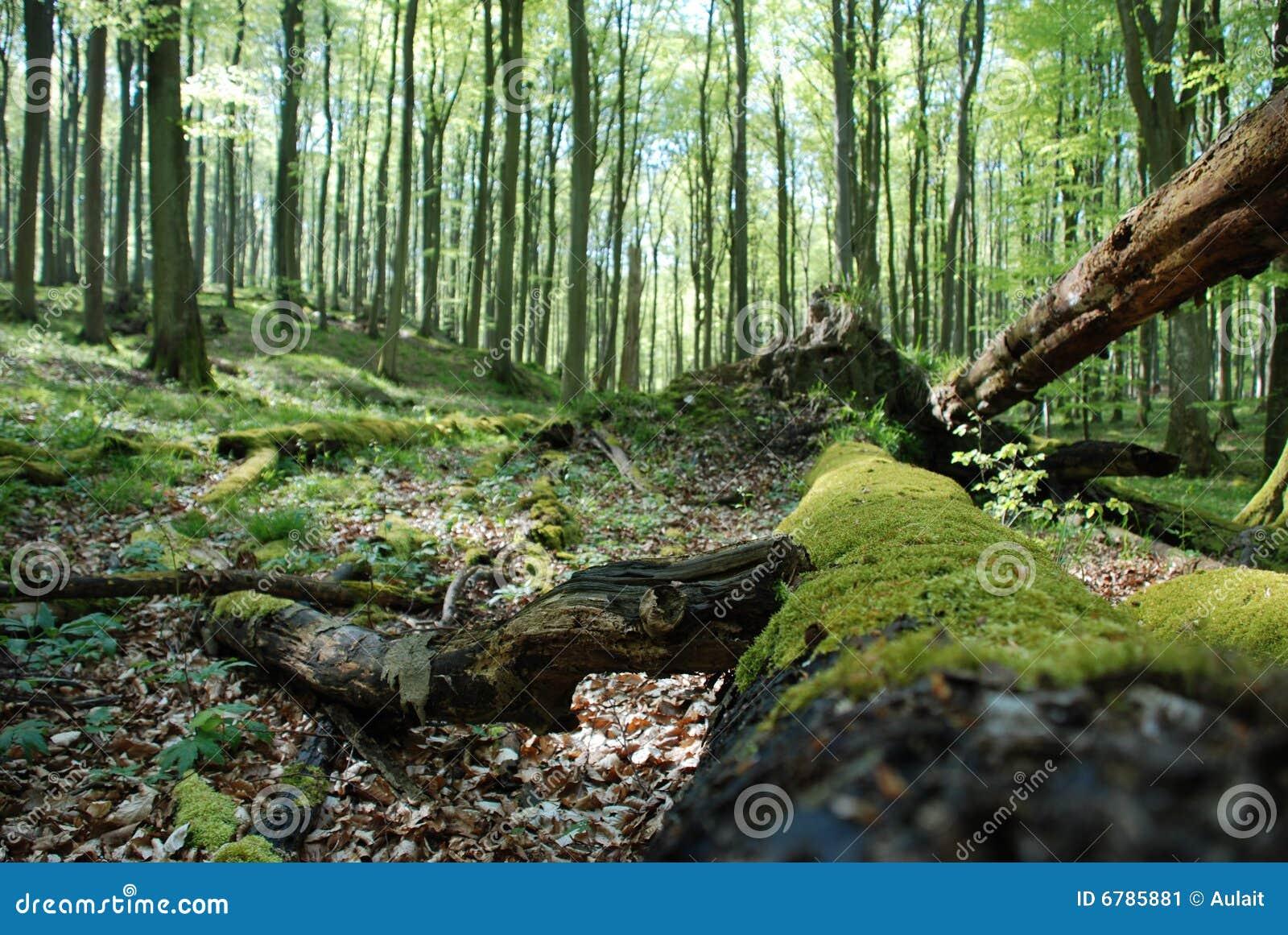 Uma árvore caída velha em uma floresta sunlit