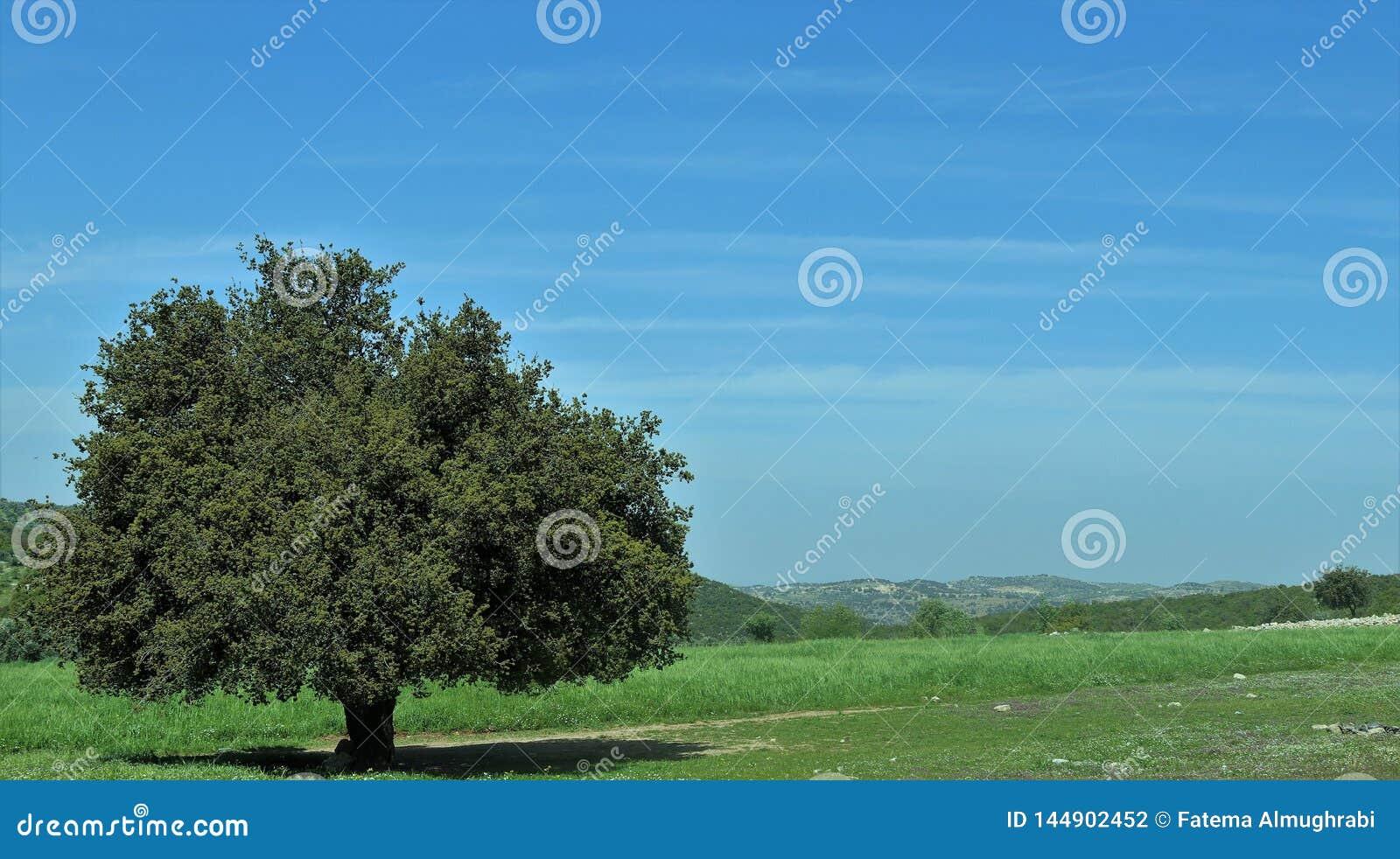 Uma árvore no meio na grama