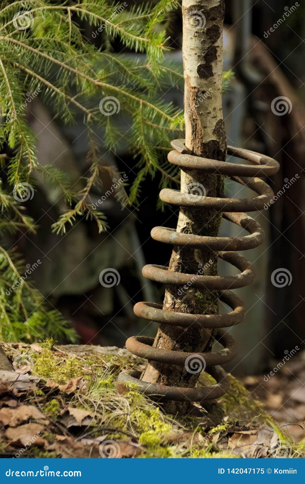 Uma árvore que cresce através da mola de bobina