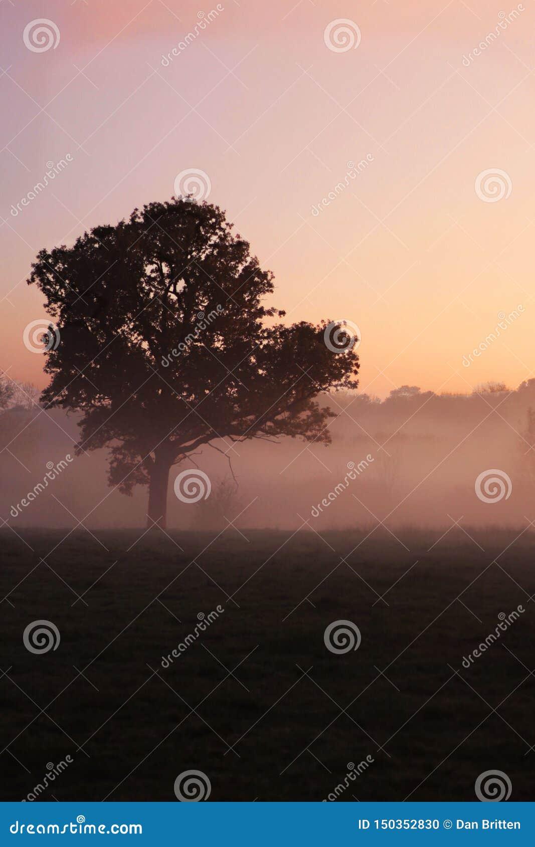 Uma árvore solitária em uma manhã nevoenta