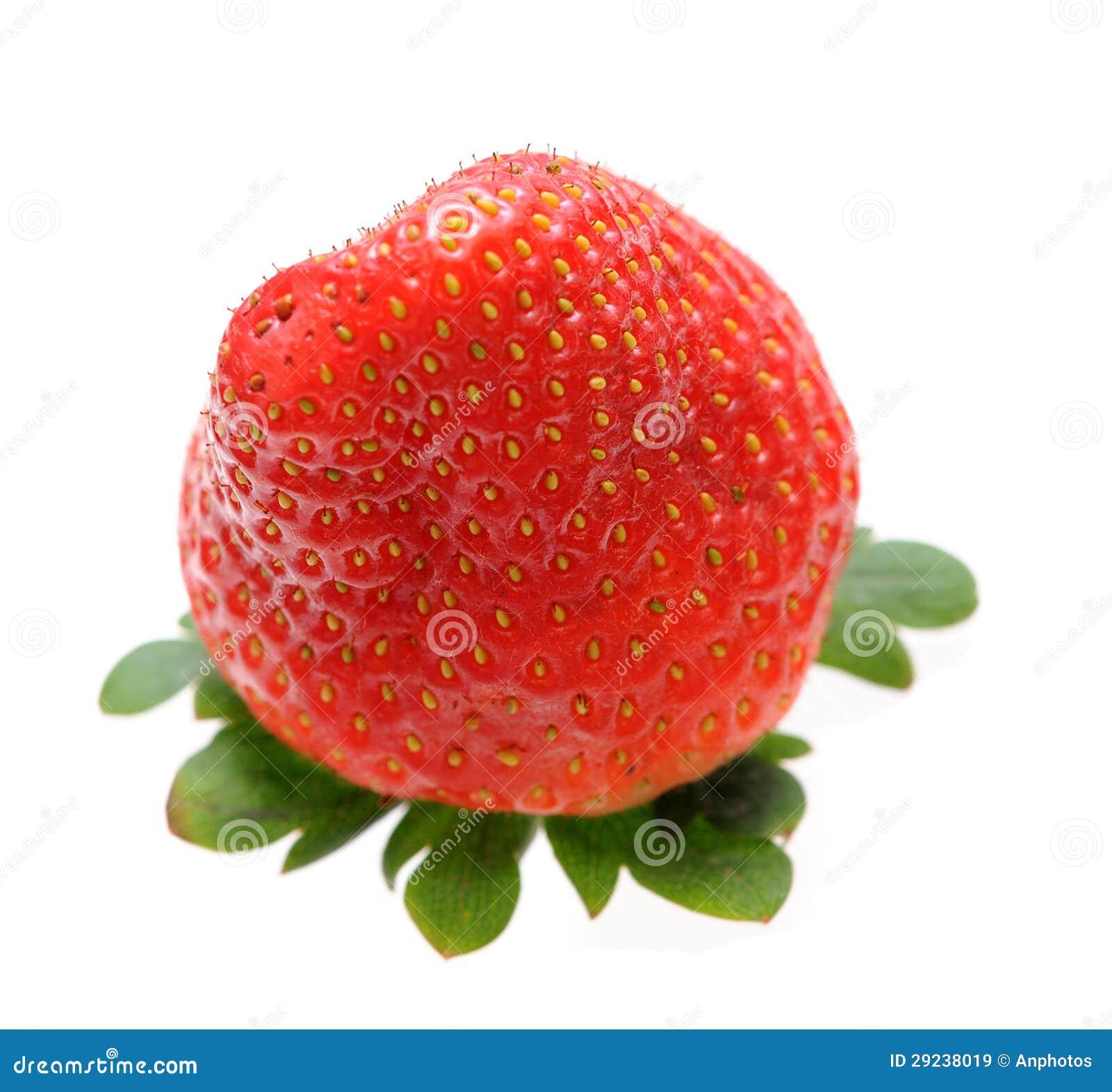 Download Uma única morango imagem de stock. Imagem de fresco, suculento - 29238019