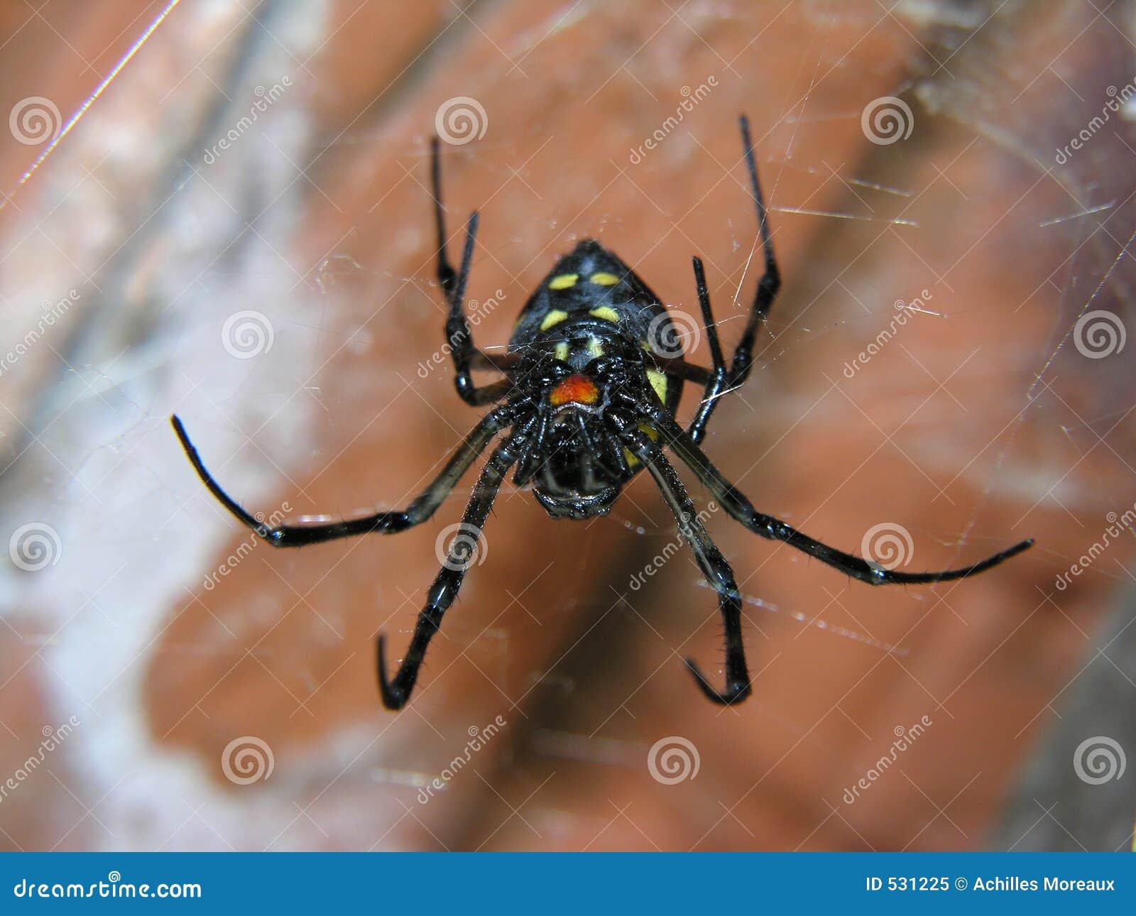 Uma aranha em seu Web