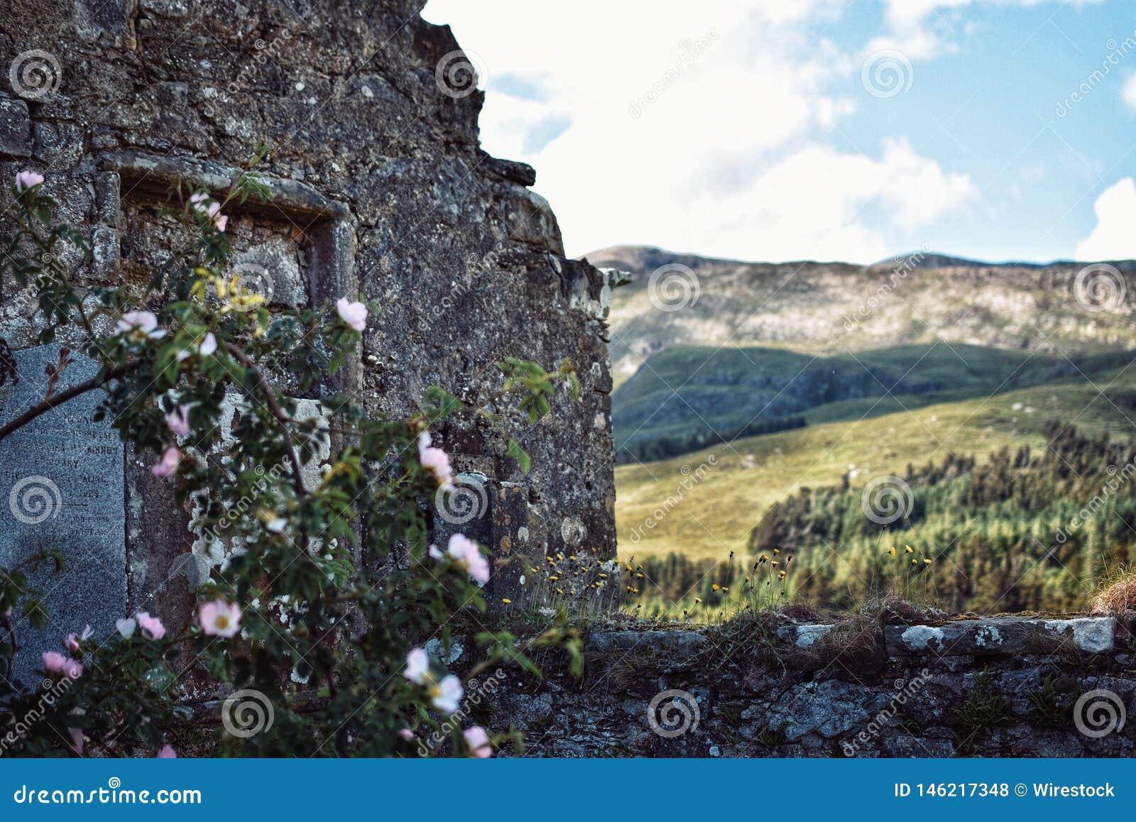 Uma arquitetura abandonada em um campo com hortaliças na parte dianteira
