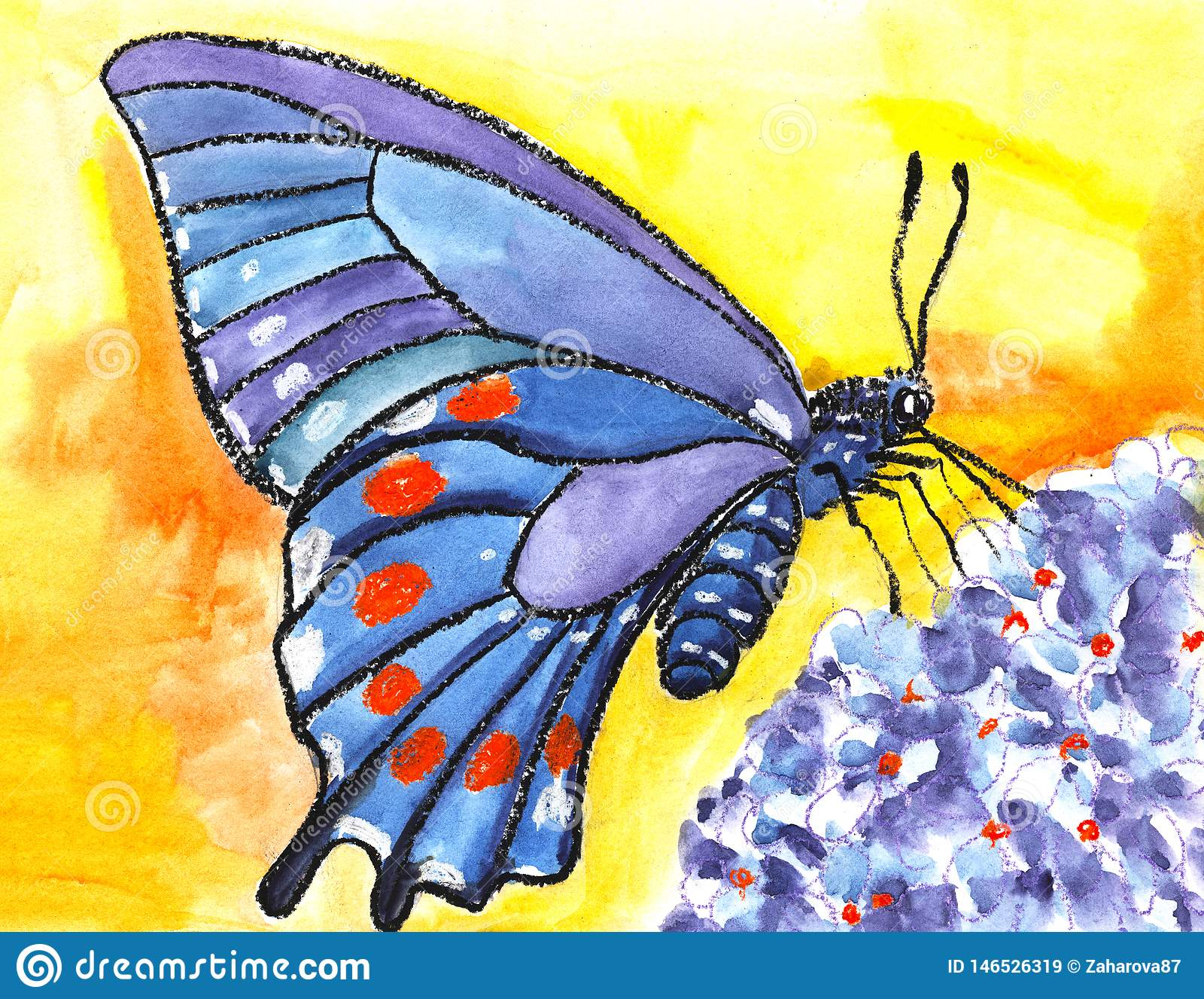 Uma borboleta grande com as asas azuis bonitas com pontos alaranjados senta-se em uma flor azul em um fundo amarelo