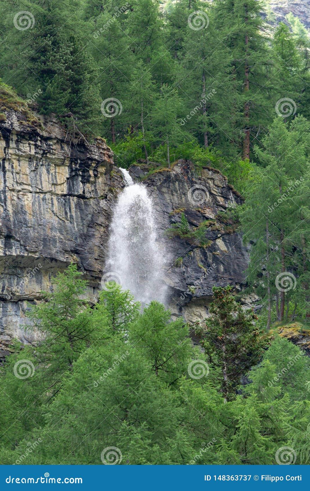 Uma cachoeira quebra através da montanha na floresta