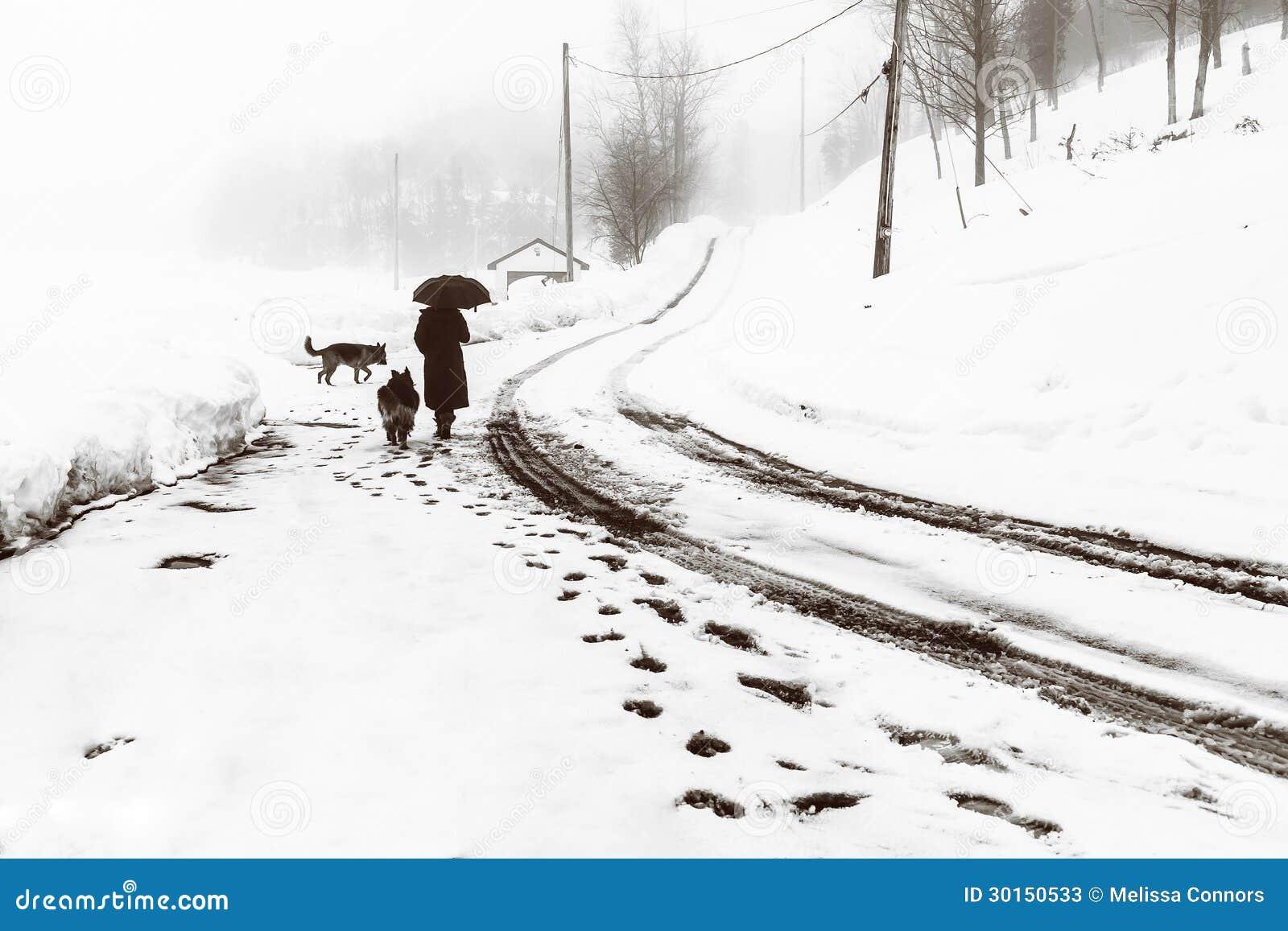 Caminhada chuvosa com cães