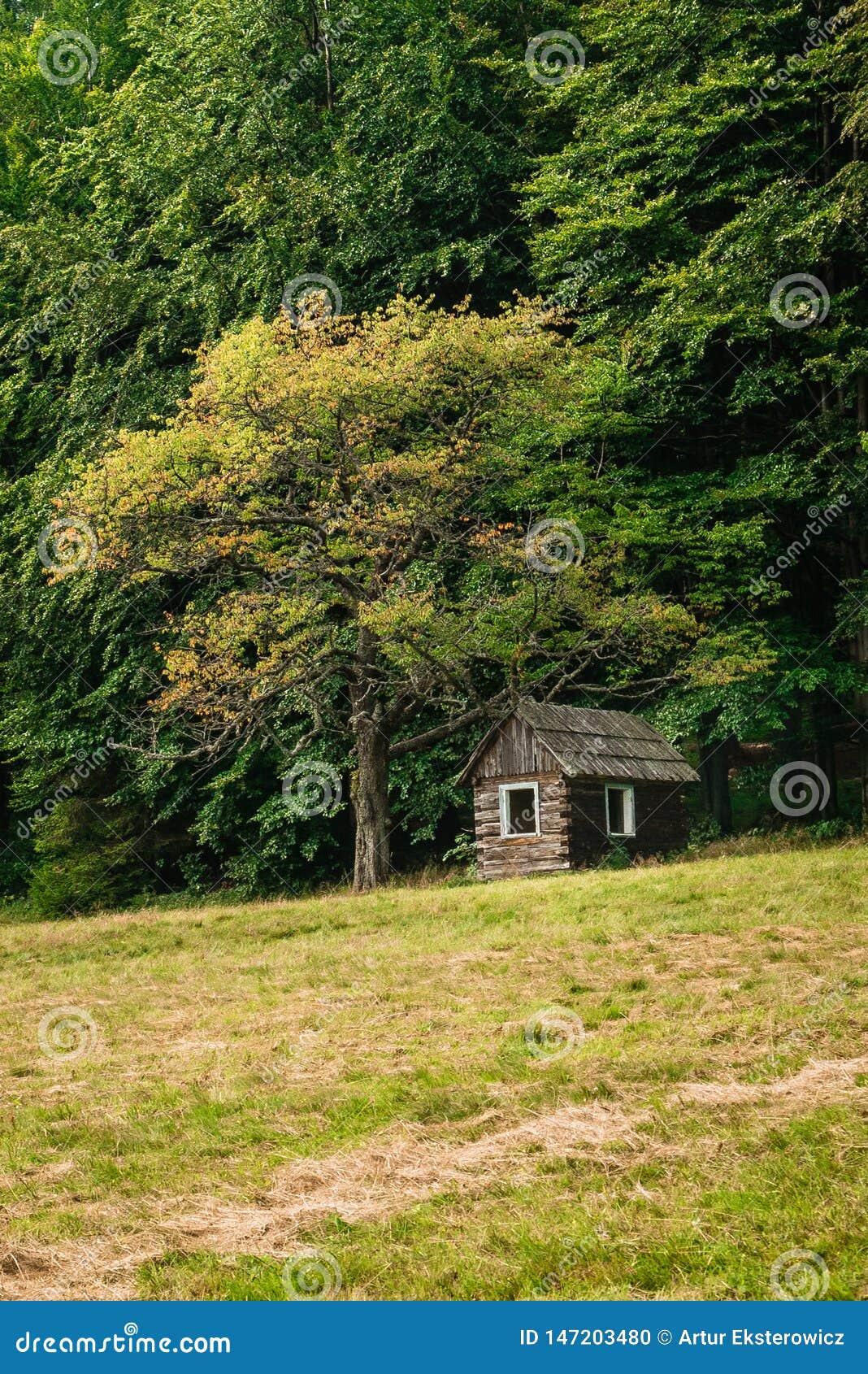Uma casa de madeira pequena sob uma árvore