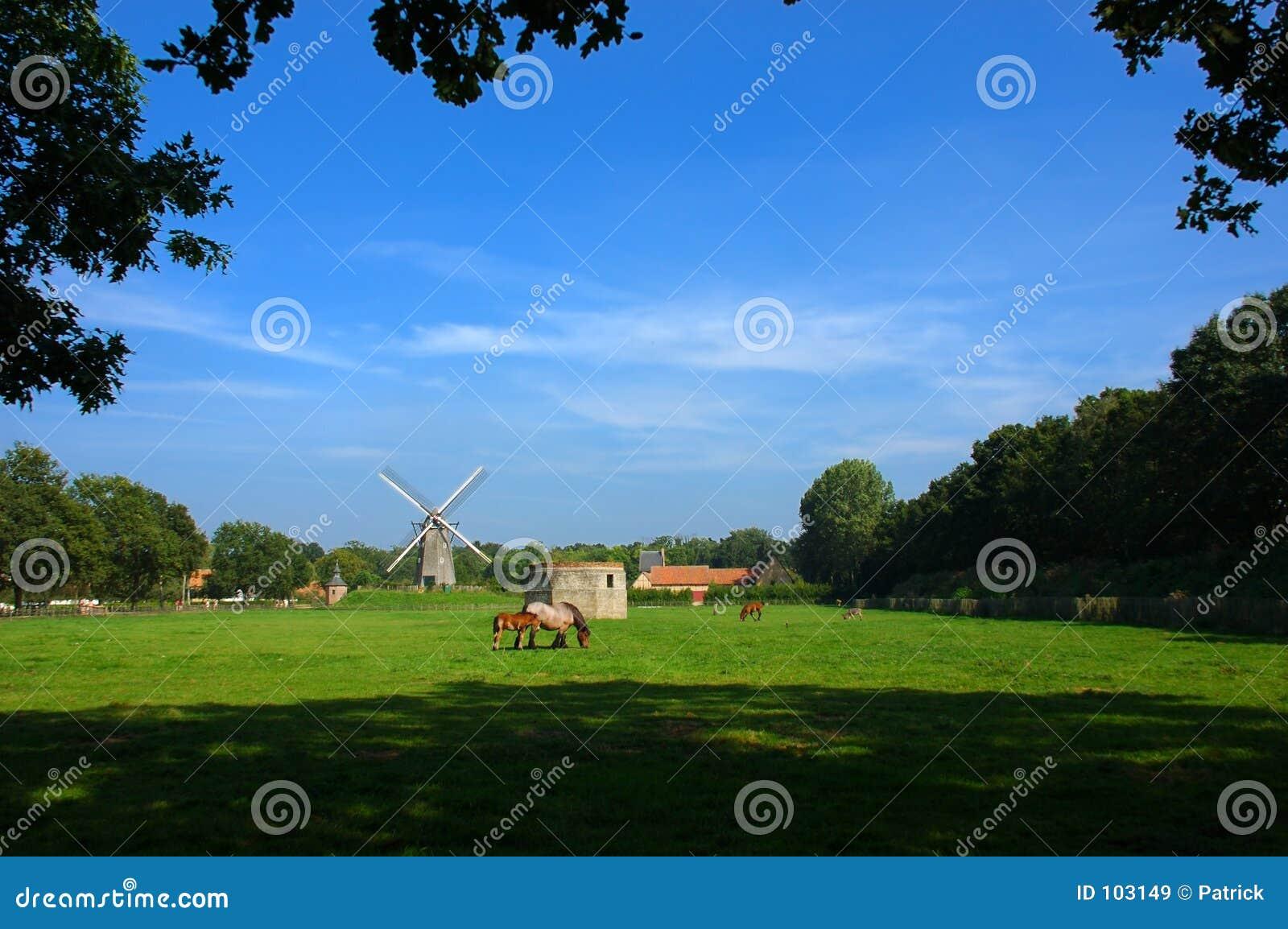 Uma cena rural com um moinho de vento.