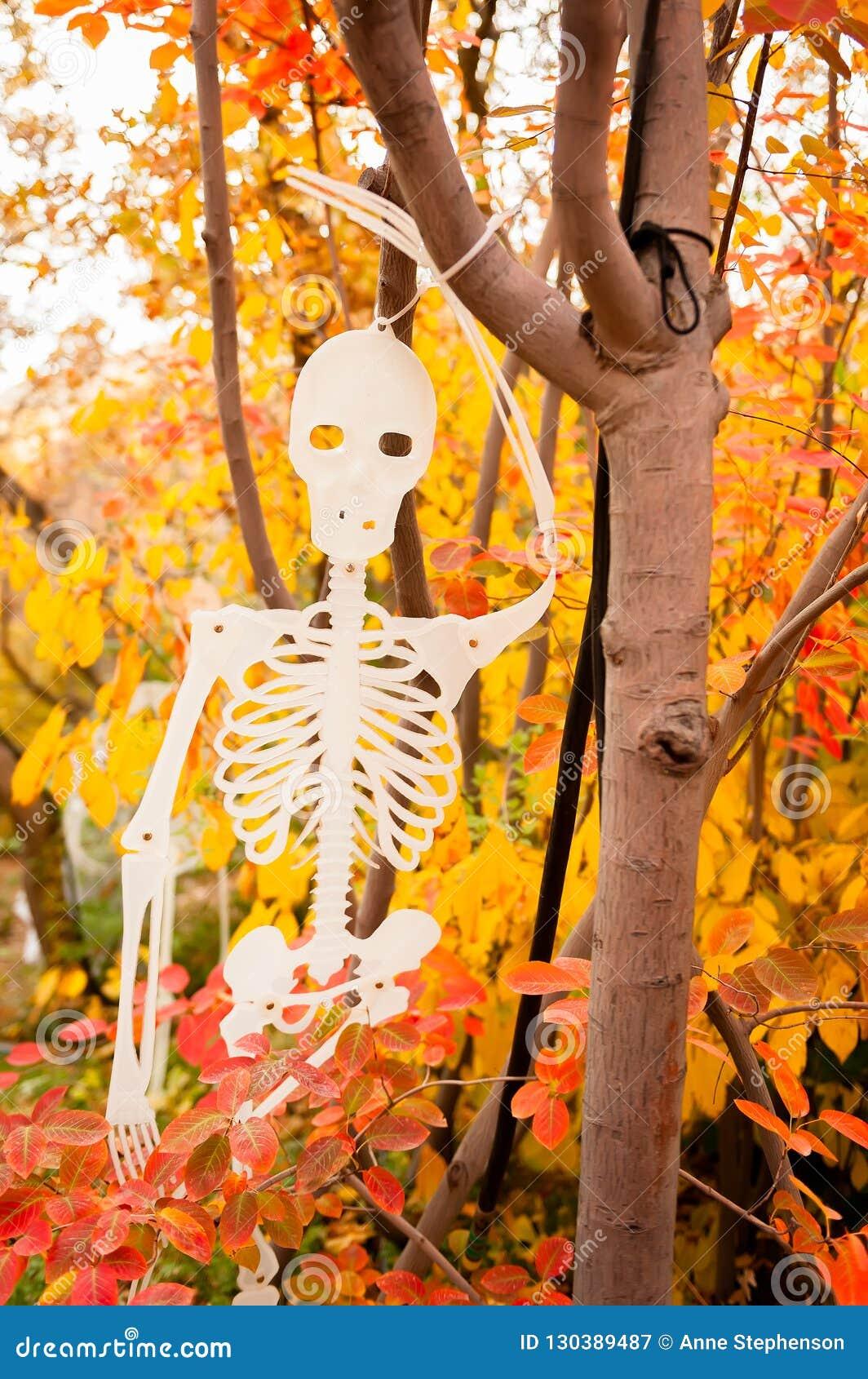 Uma decoração de esqueleto de Dia das Bruxas que pendura em uma árvore com as folhas coloridas no fundo