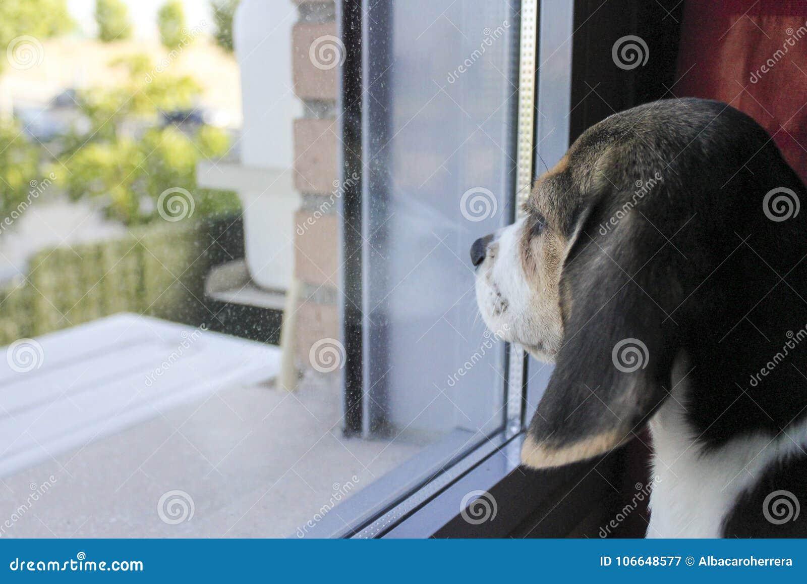 Uma espera do cão de cachorrinho