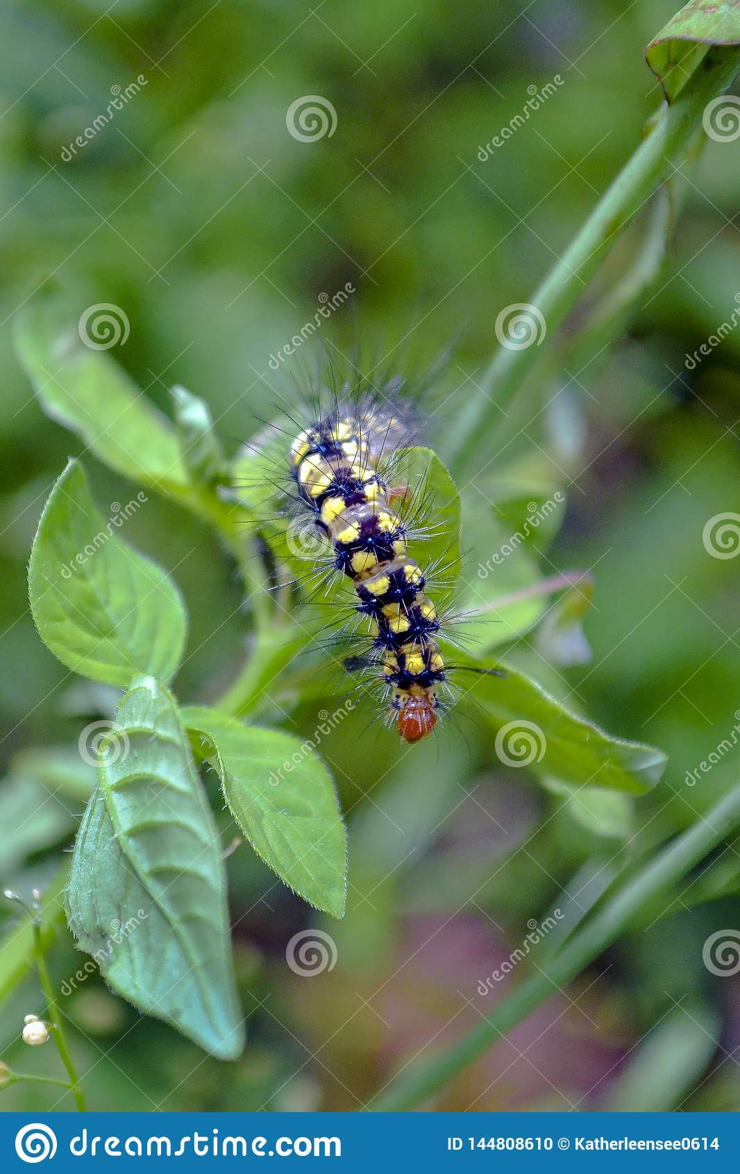Uma estada da lagarta na folha