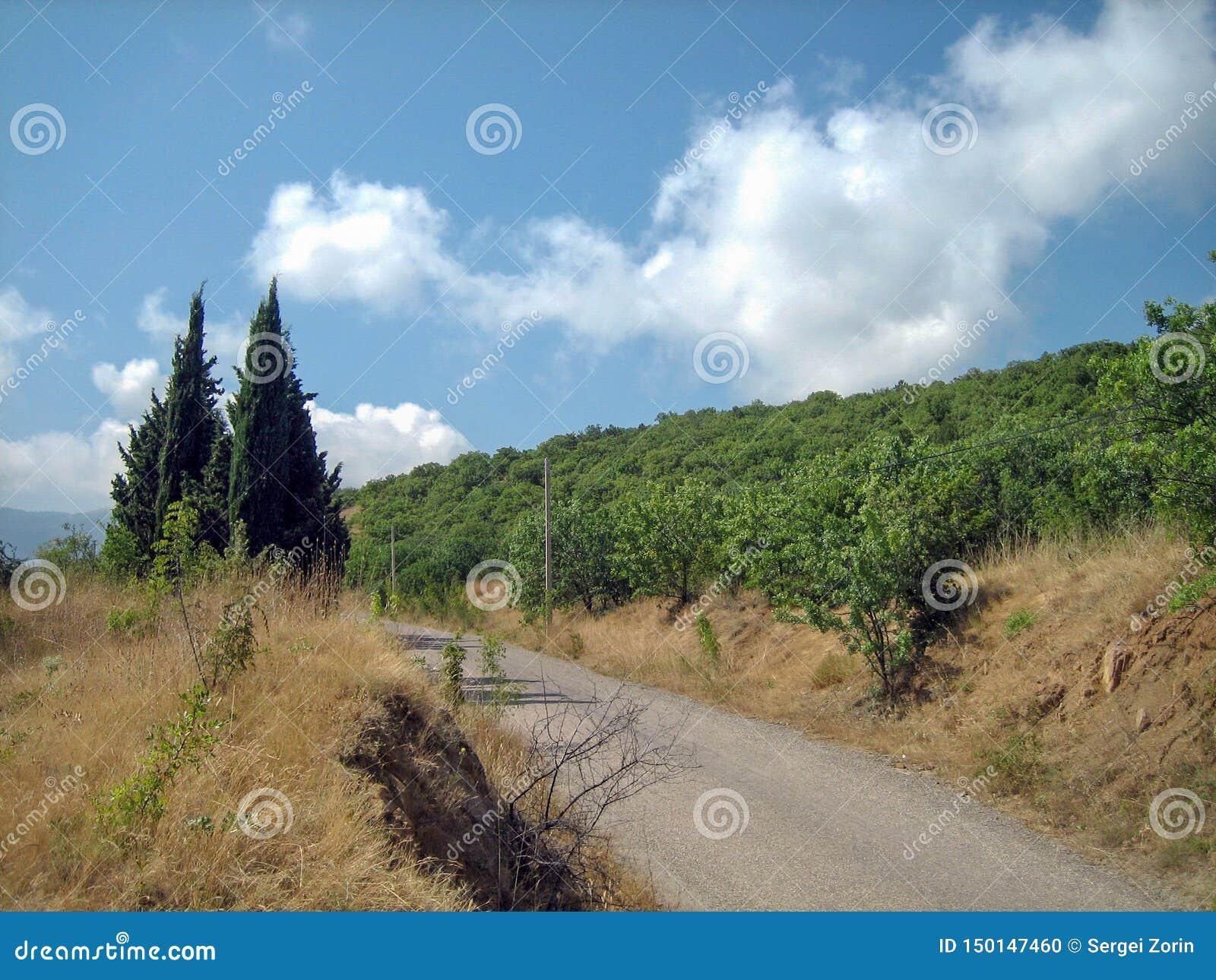 Uma estrada asfaltada estreita em um dia ensolarado quente após árvores sempre-verdes e a grama sol-chamuscada