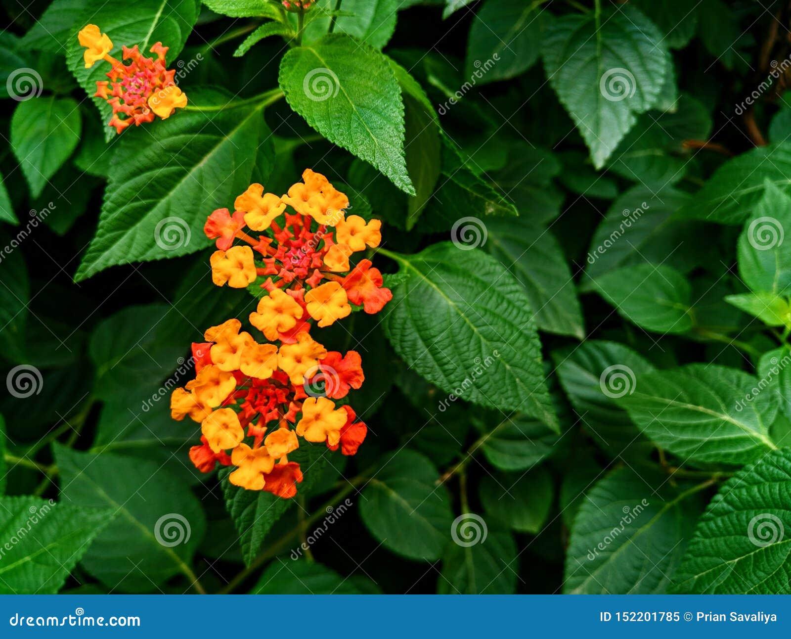 Uma flor bonita com folhas verdes