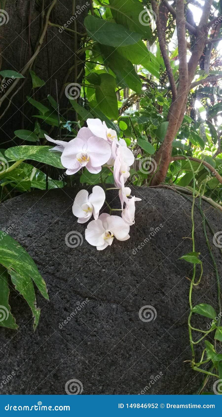 Uma flor das rochas