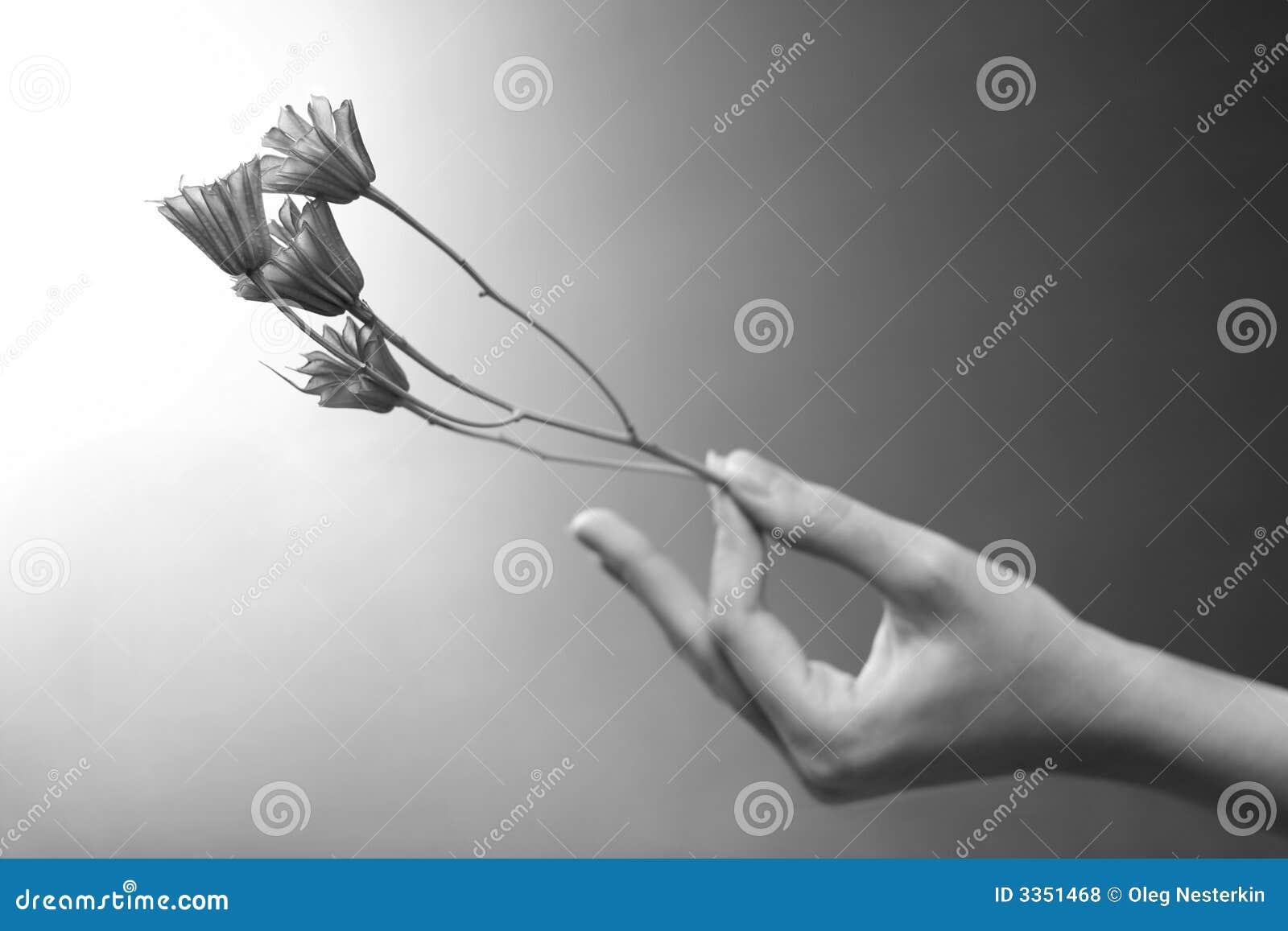 Uma flor está em uma mão