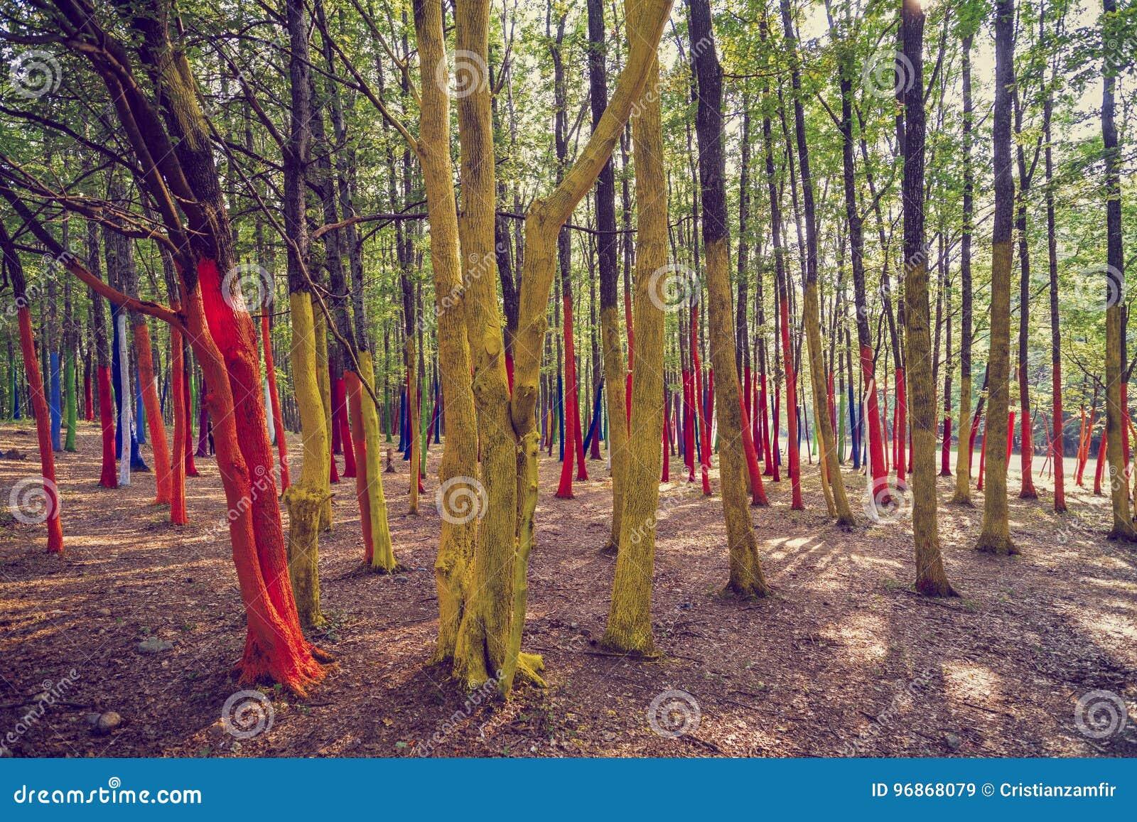 Uma floresta com as árvores pintadas em cores diferentes