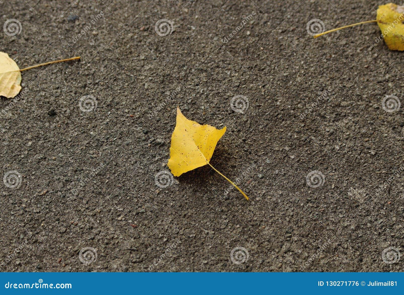Uma folha amarela pequena encontra-se no asfalto cinzento Fundo do outono