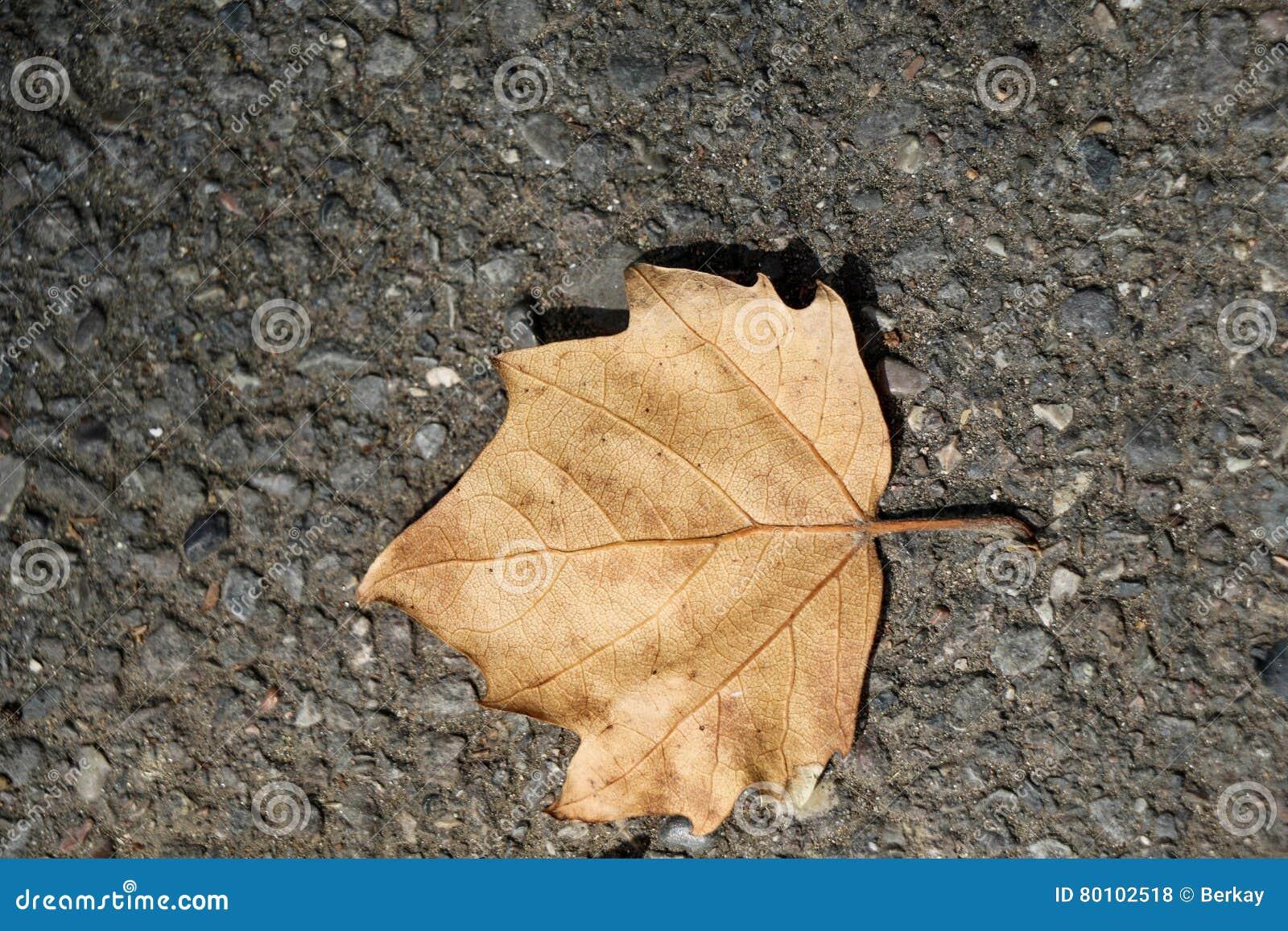 Uma folha seca separada