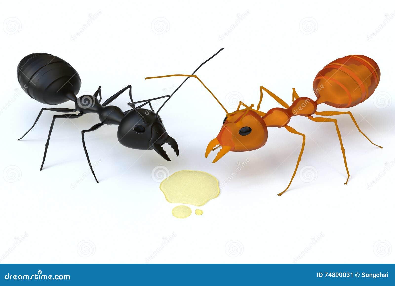 Uma formiga preta é confrontada com uma formiga alaranjada para o xarope