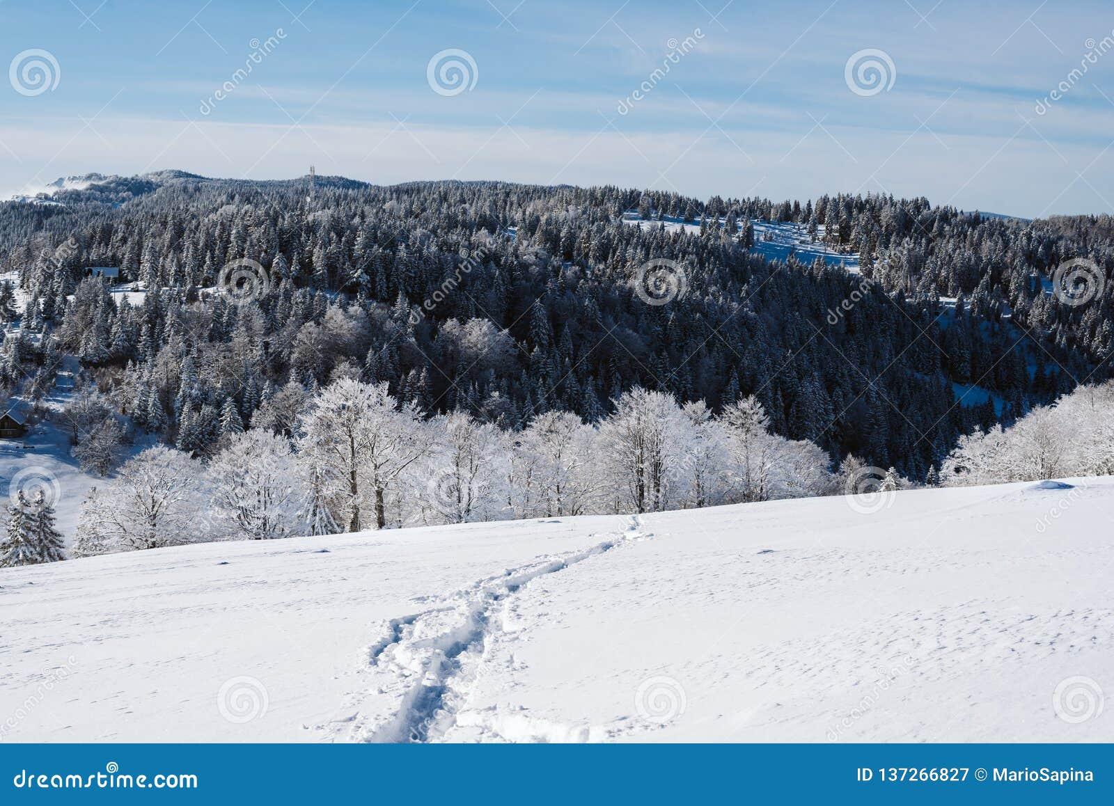 Uma fuga na inclinação nevado na parte superior da montanha com os pinhos no fundo