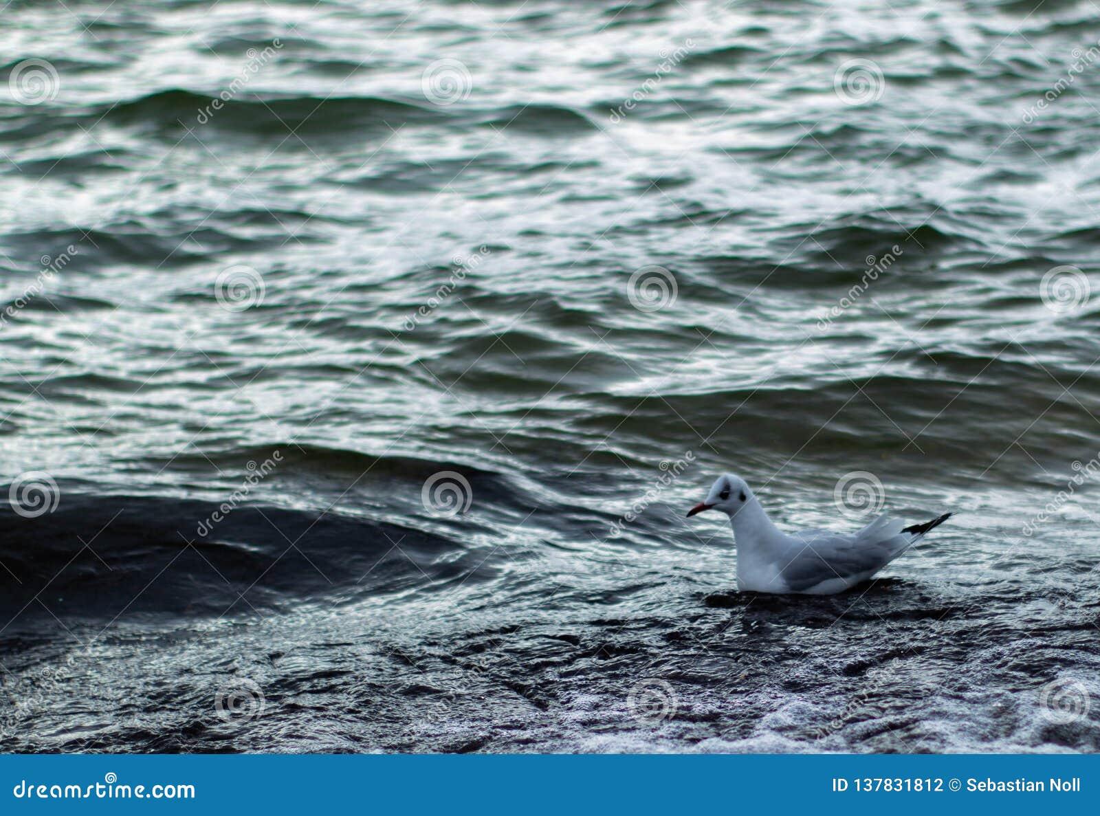 Uma gaivota está montando a onda