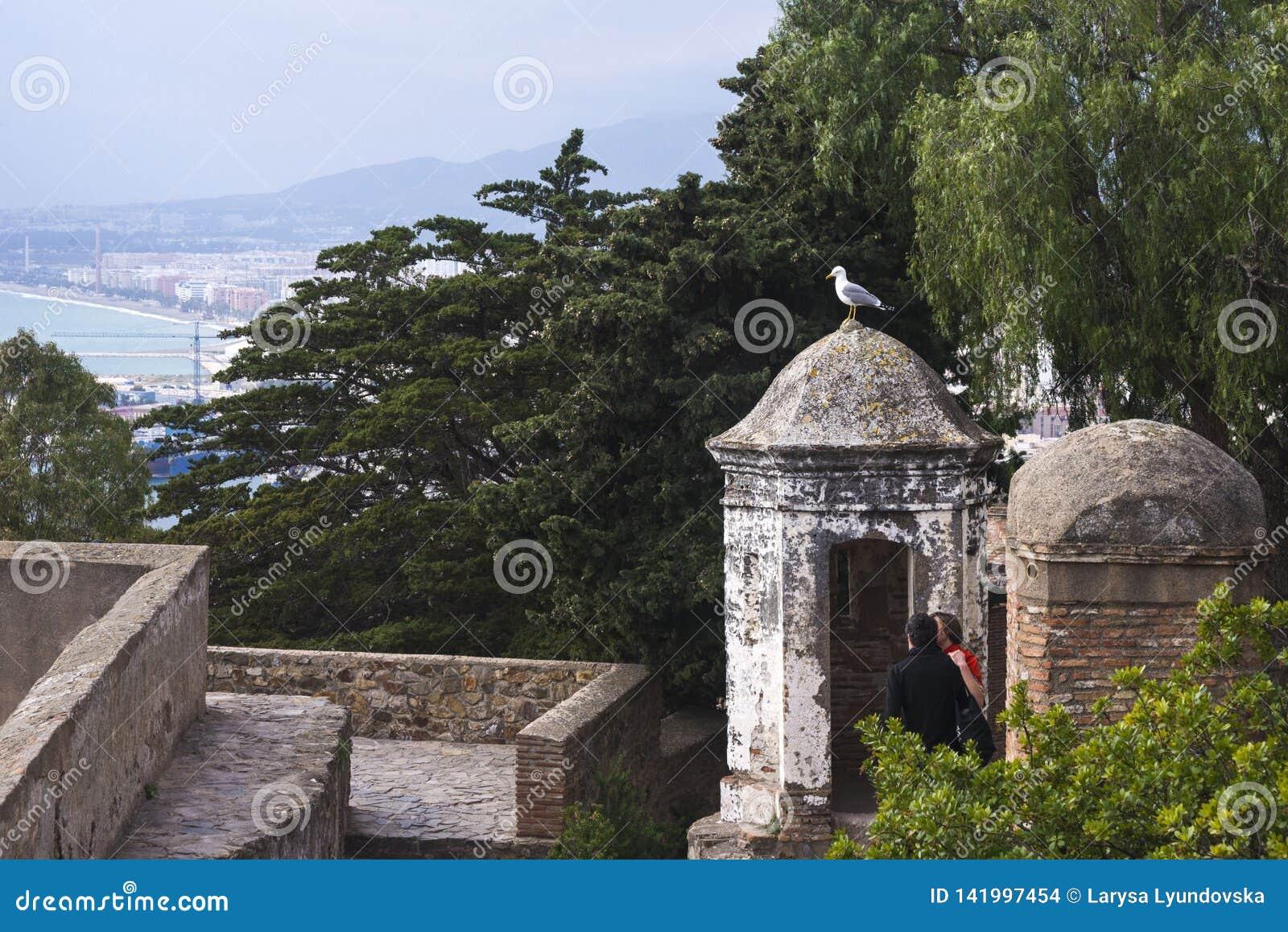 Uma gaivota senta-se na abóbada de uma construção velha na fortaleza Gibralfaro, Malaga, Espanha Um par de amor olha um pássaro