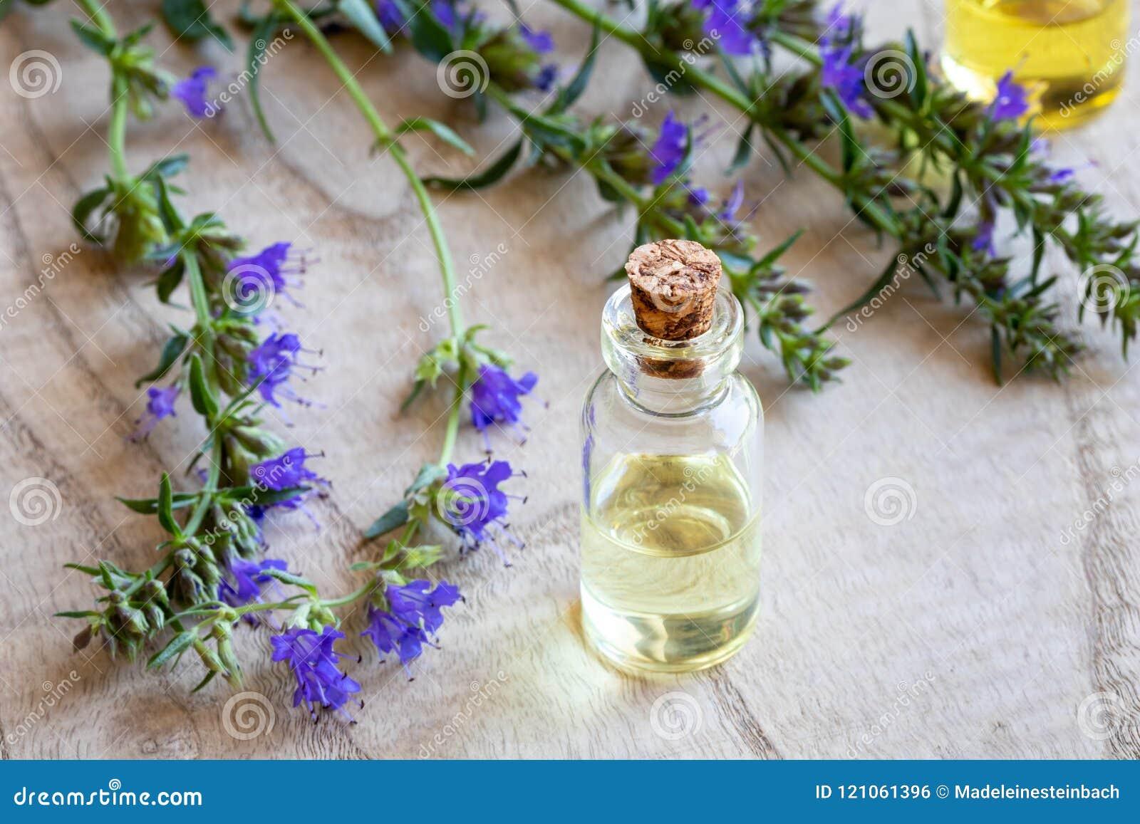 Uma garrafa do óleo essencial do hyssop com o hyssop de florescência fresco