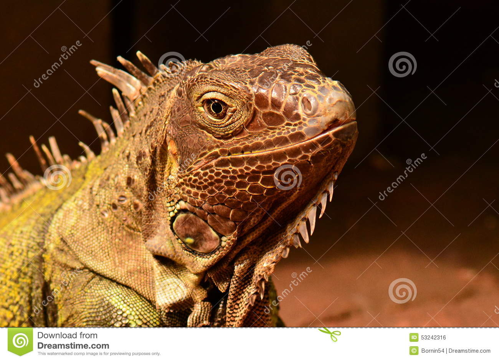 Uma iguana verde