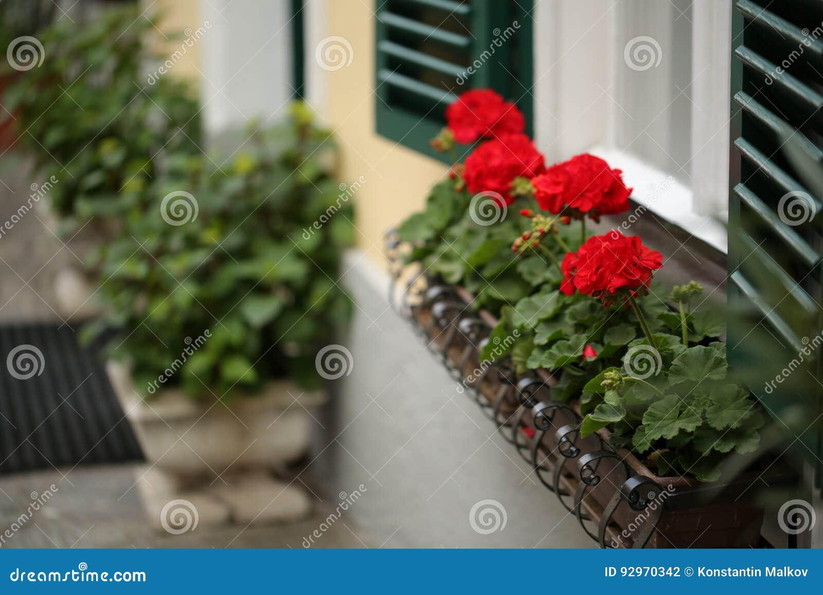 Uma janela austríaca típica com os shuters e quadrado louvered verdes paned janelas com as flores em uns potenciômetros de flor d