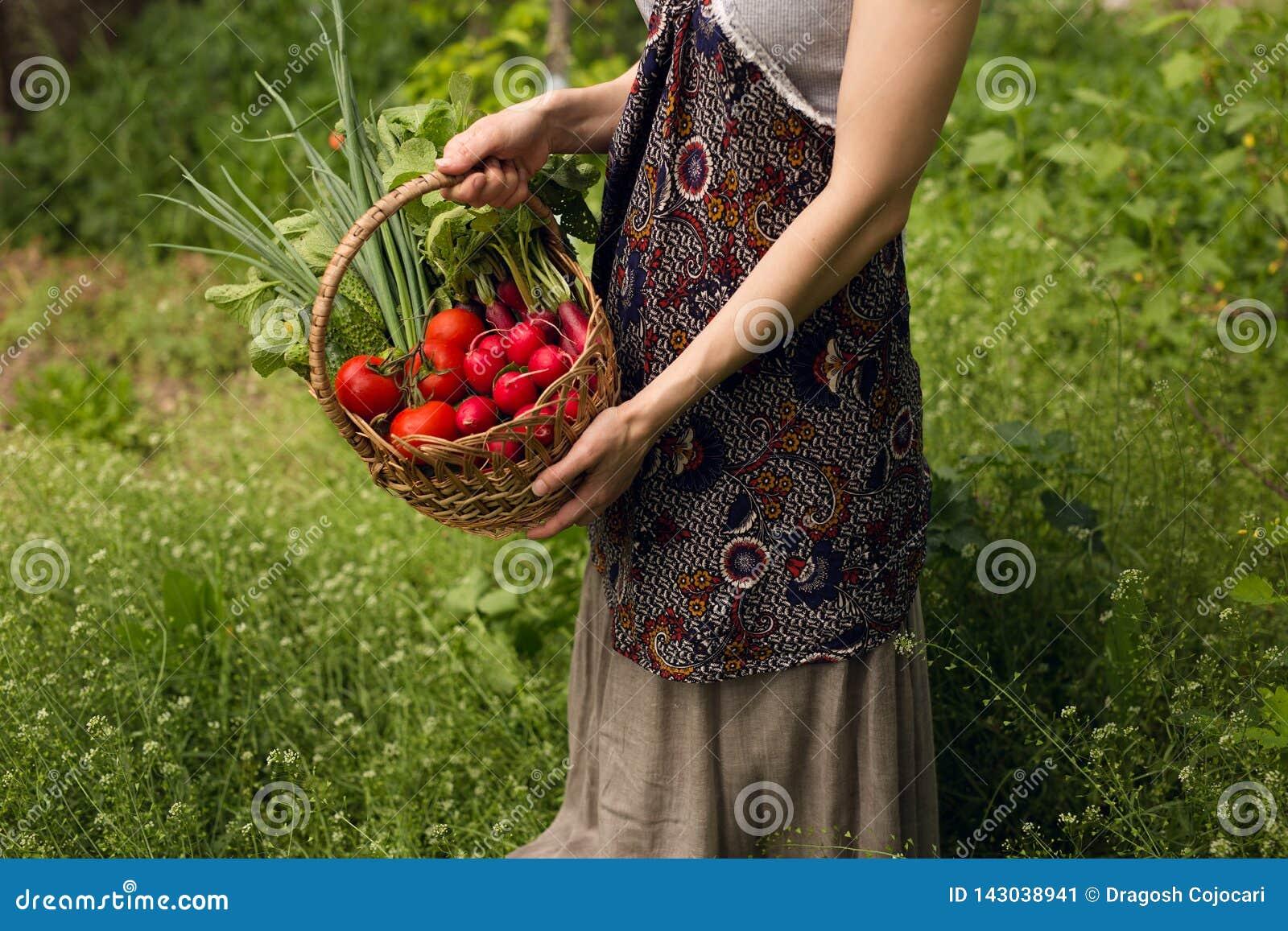 Uma jovem mulher que realiza nas mãos uma cesta com os legumes frescos orgânicos sortidos, em um fundo verde bonito do jardim