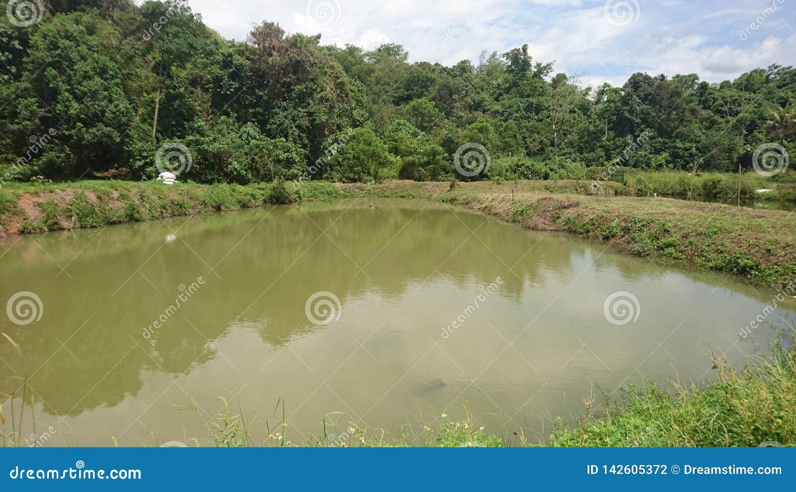 Uma lagoa de peixes nebulosa natural