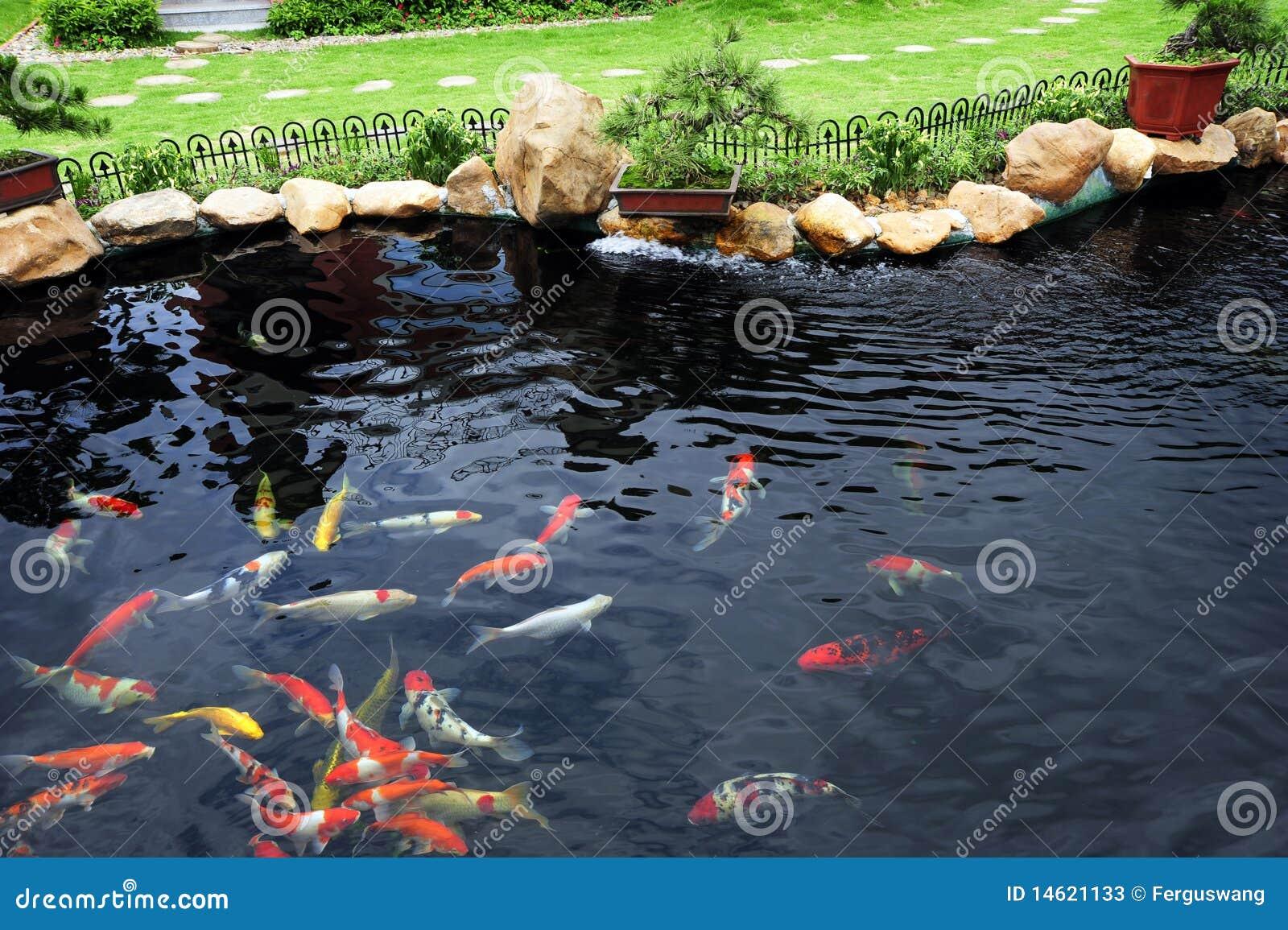 Uma lagoa de peixes no jardim