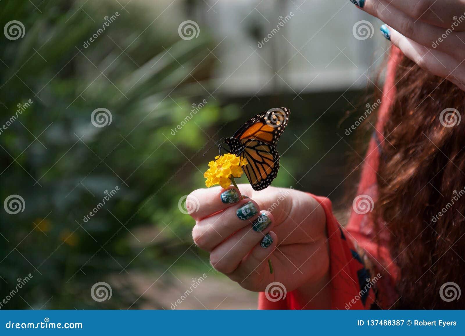 Uma laranja, borboleta preto e branco em uma flor amarela na mão de uma senhora