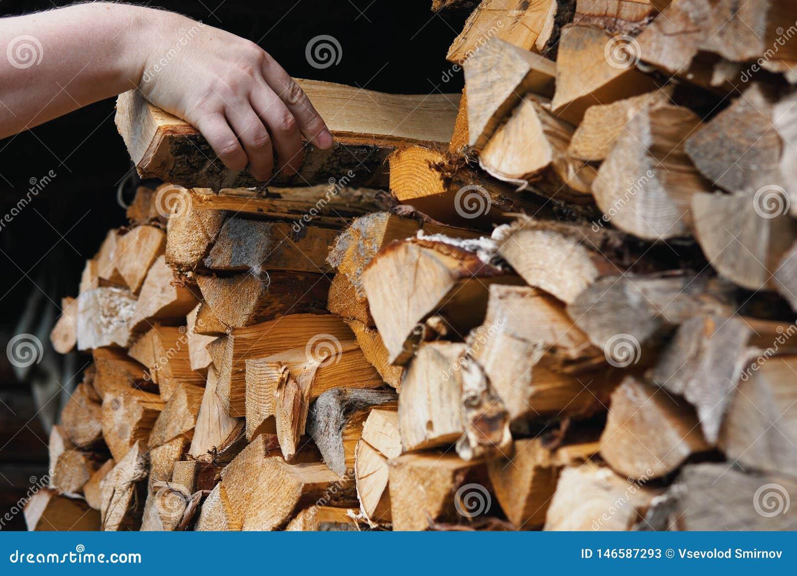 Uma m?o do ` s do homem toma a um vidoeiro o log lascado seco de um woodpile