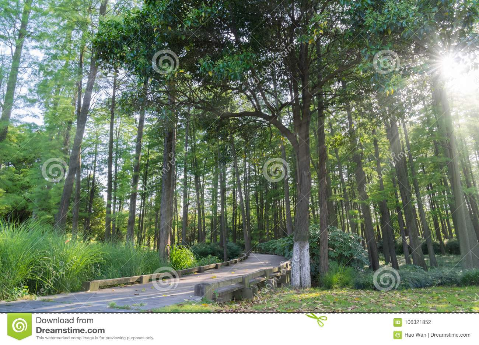 Uma madeira em China